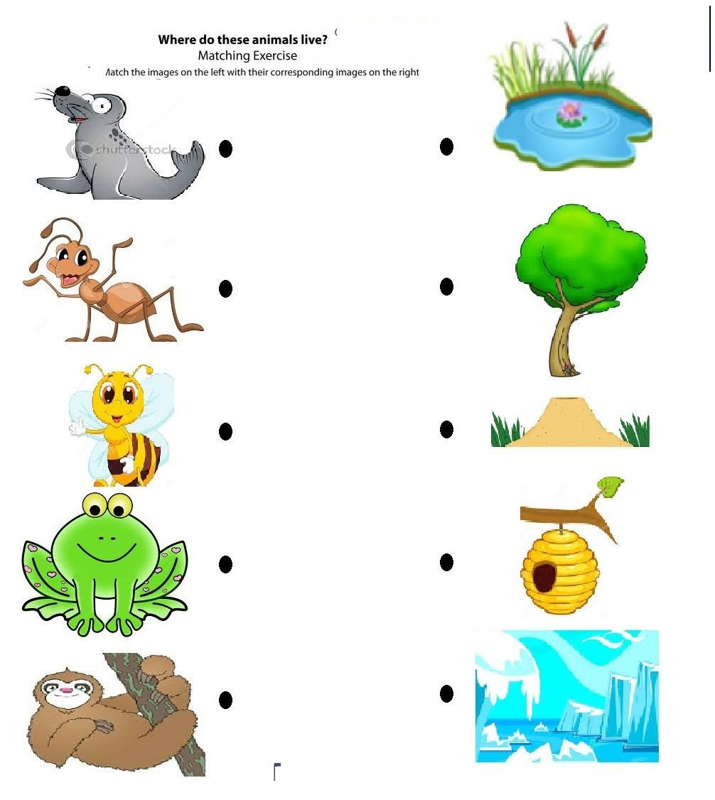 Animal Homes Worksheet Free Printable Matching Animals to their Home Worksheet 7