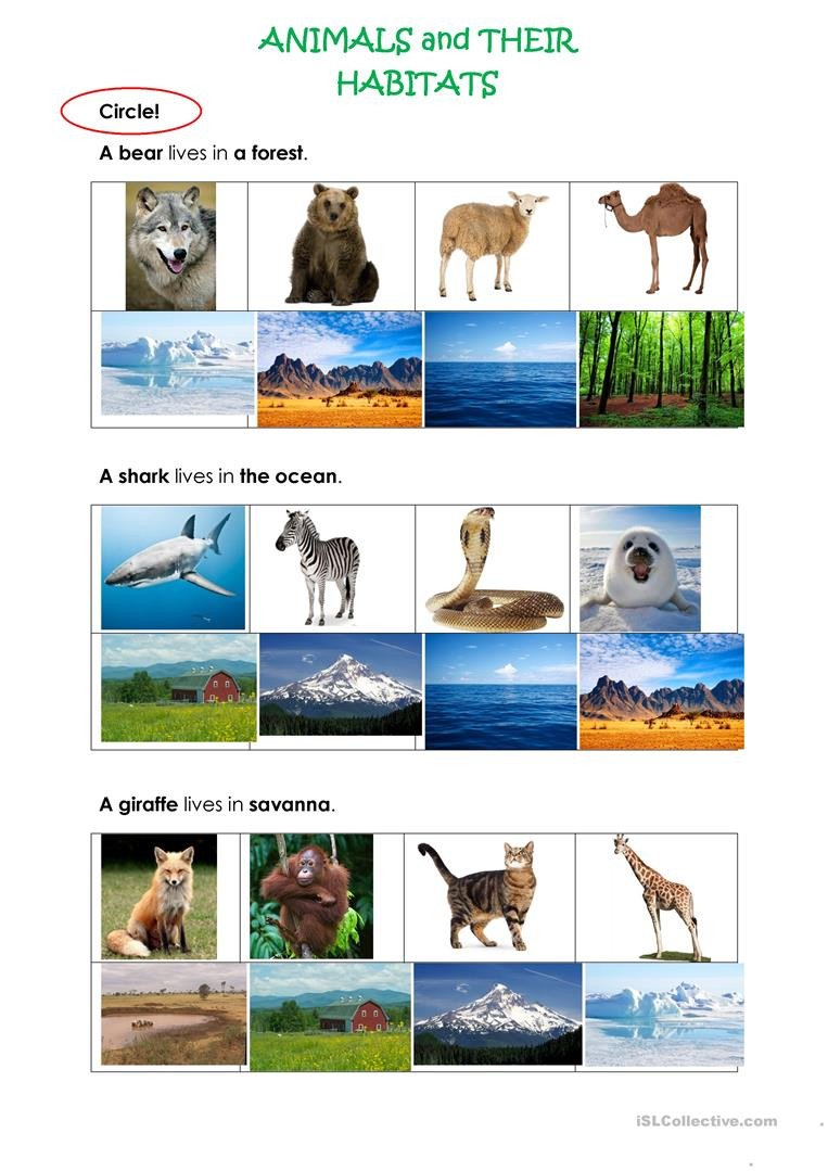 animals and their habitats reading prehension exercises 1