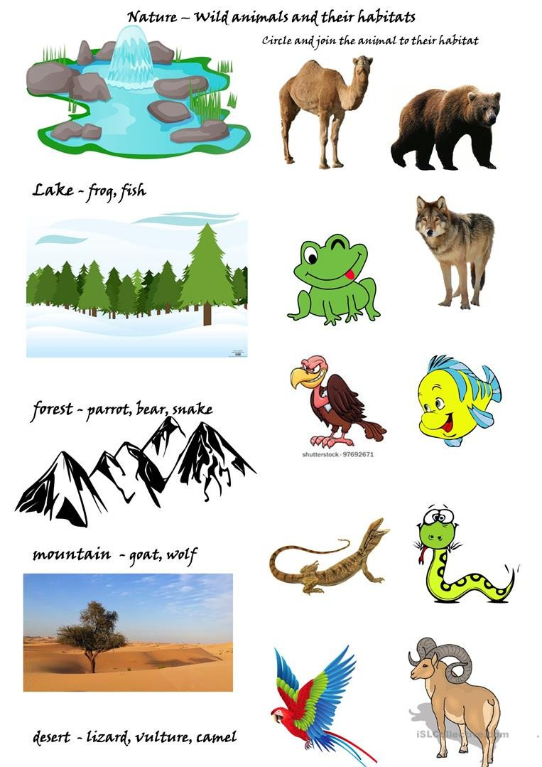 Wild animals and their habitats English ESL Worksheets for