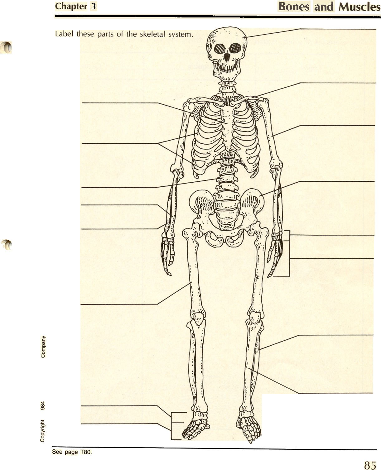 Blank Skeletal System Worksheet Blank Skeletal System Diagram Human Body Anatomy