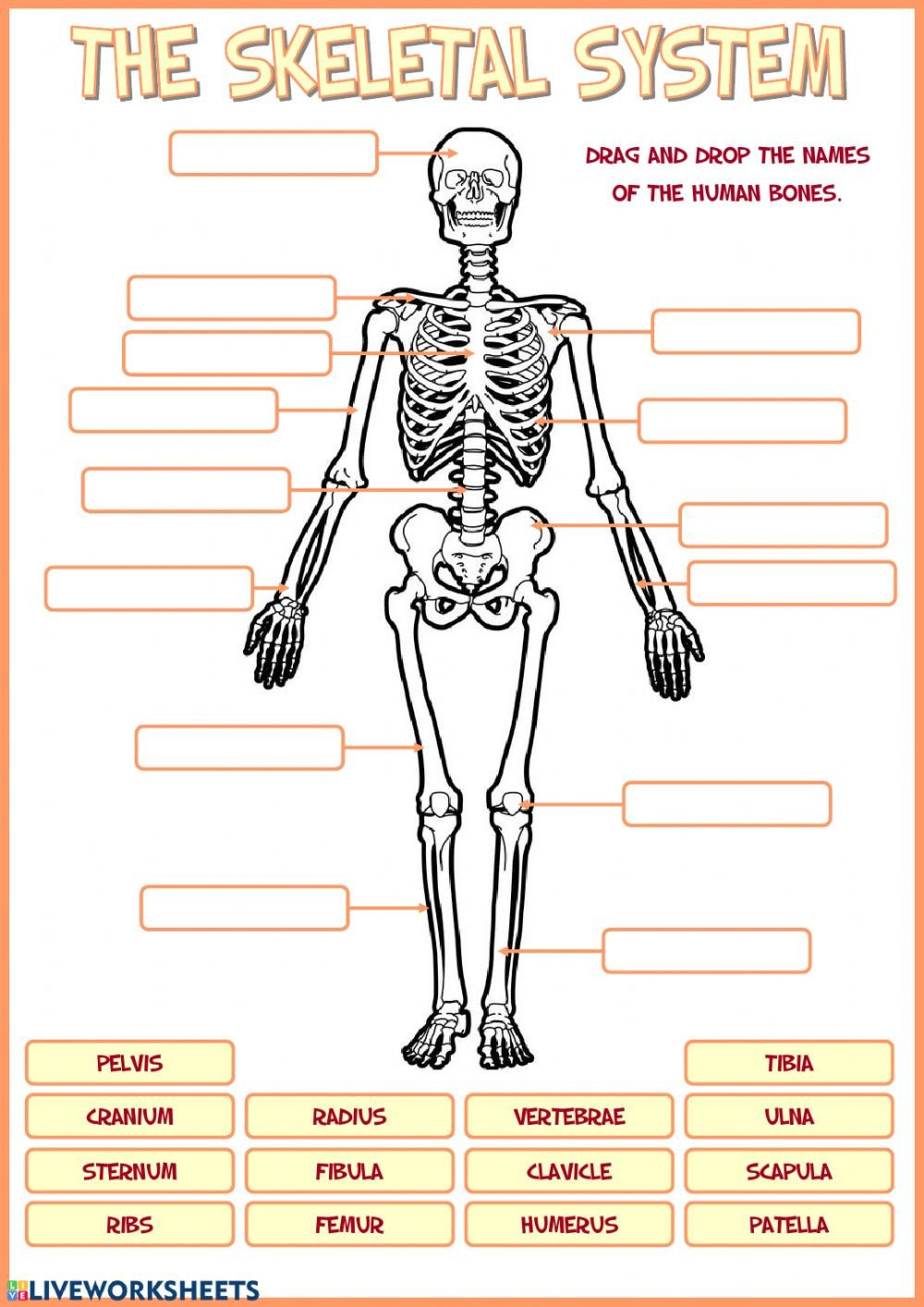 Blank Skeletal System Worksheet Skeletal System Interactive Worksheet Skeleton Bone Names