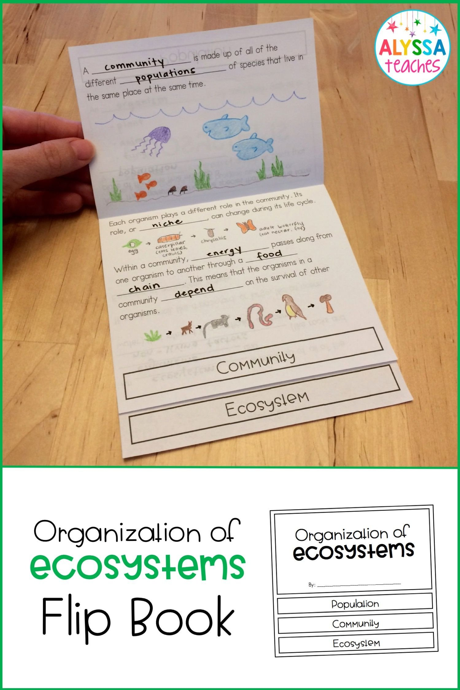 Ecosystem Worksheets 4th Grade Plant and Animal Adaptations Flip Book