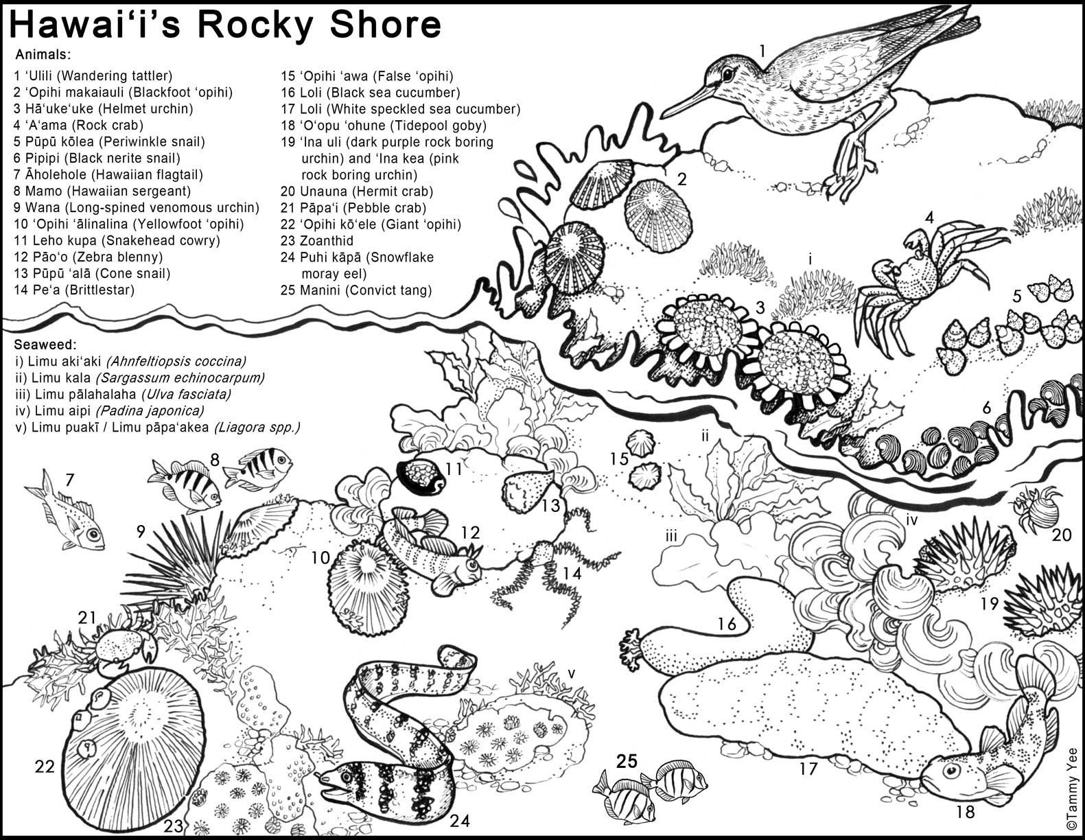 Five Food Groups Worksheets Untitled the Five Food Groups Worksheets Hawaiiintertidal144