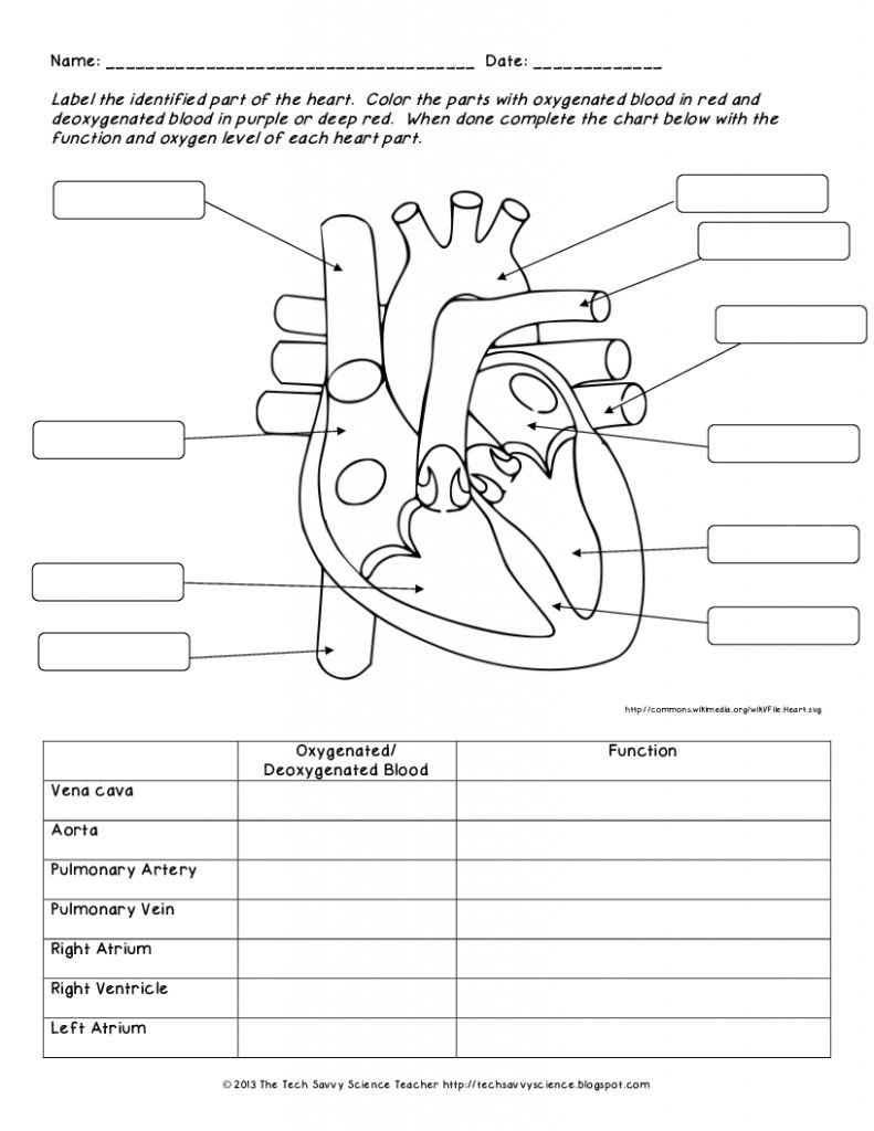 Free Human Body Systems Worksheets Chart Human Body System Worksheets organs