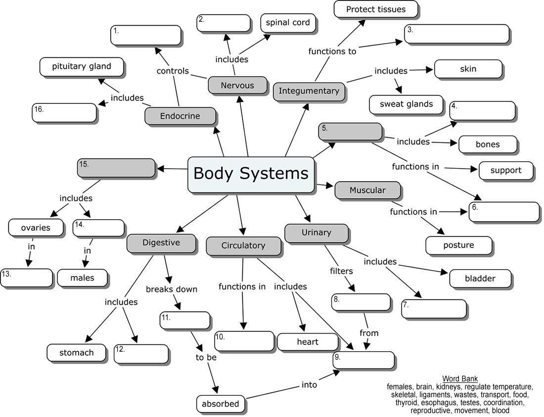 Free Human Body Systems Worksheets Free Human Body System Worksheets organs