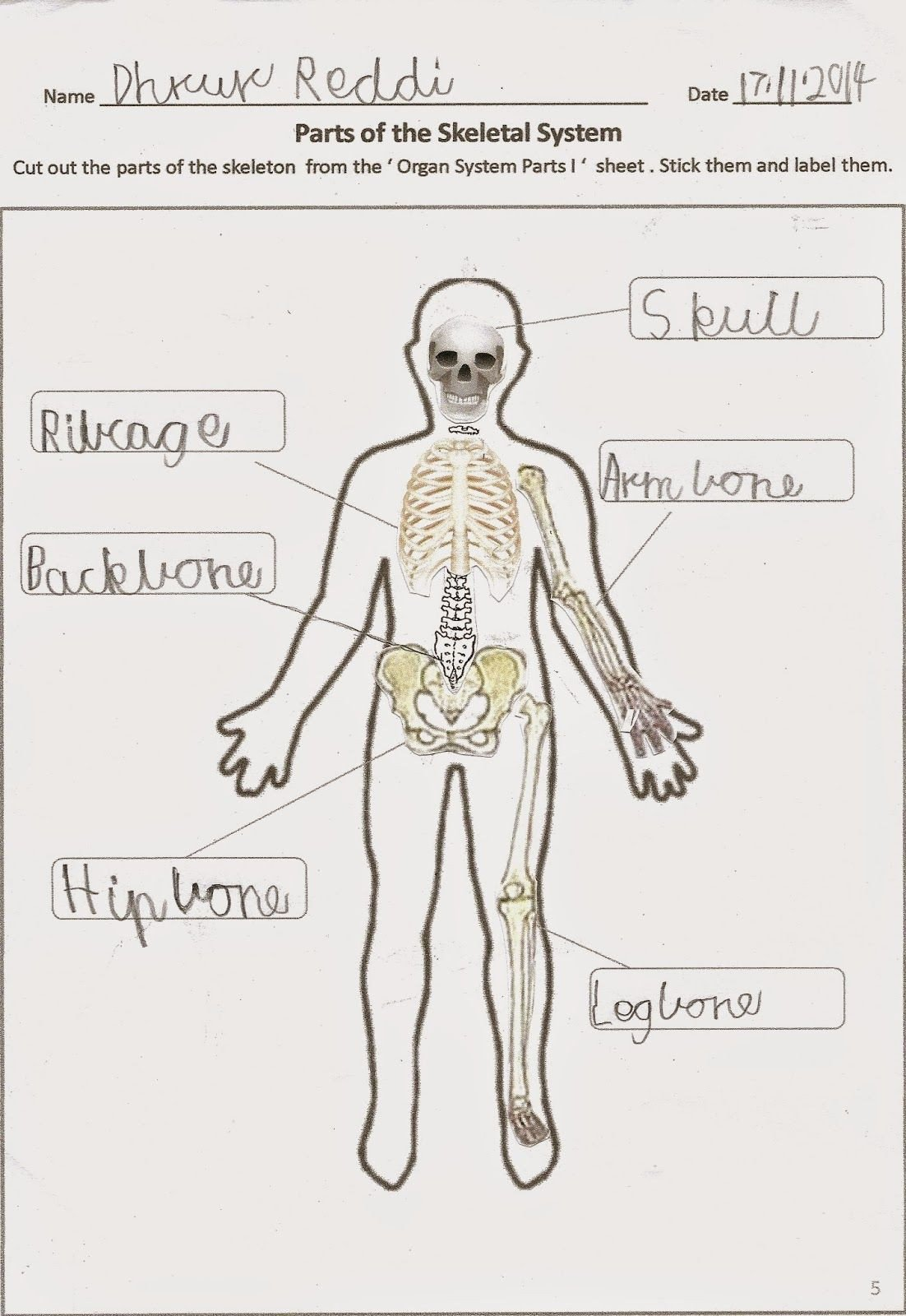 Free Human Body Systems Worksheets Happy Learners Human Body organ Systems