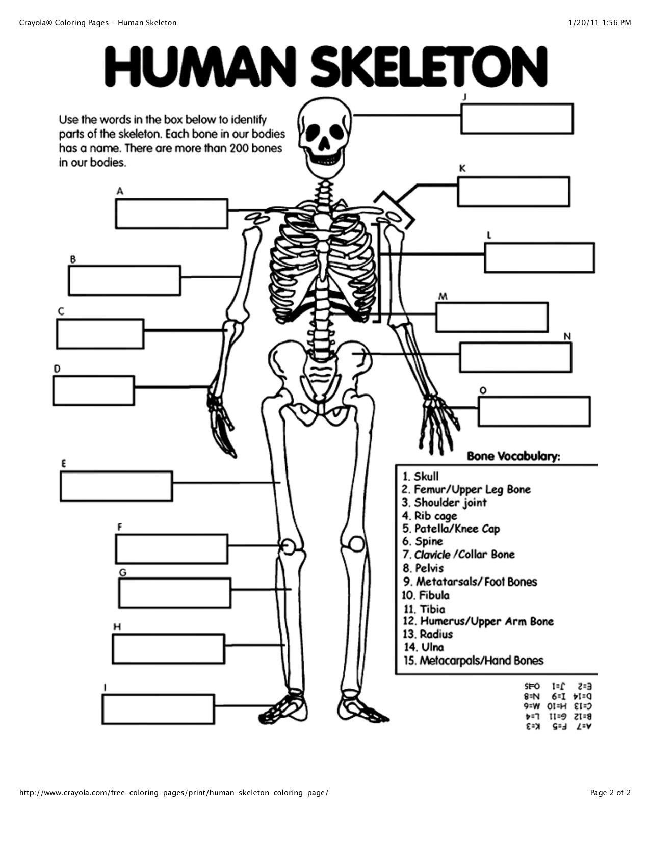 Free Human Body Systems Worksheets Human Anatomy for Beginners