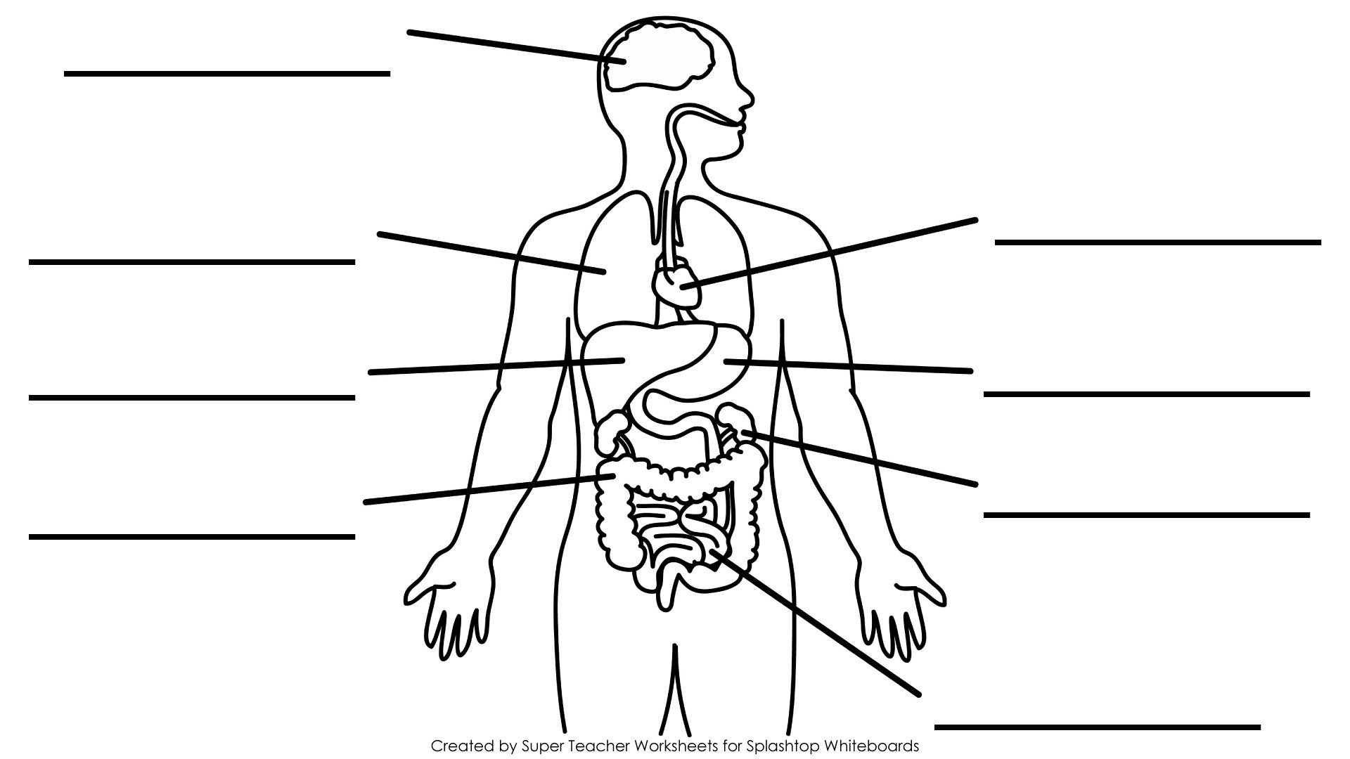 Free Human Body Systems Worksheets Human Body organs Unlabeled Diagram Human Body Anatomy