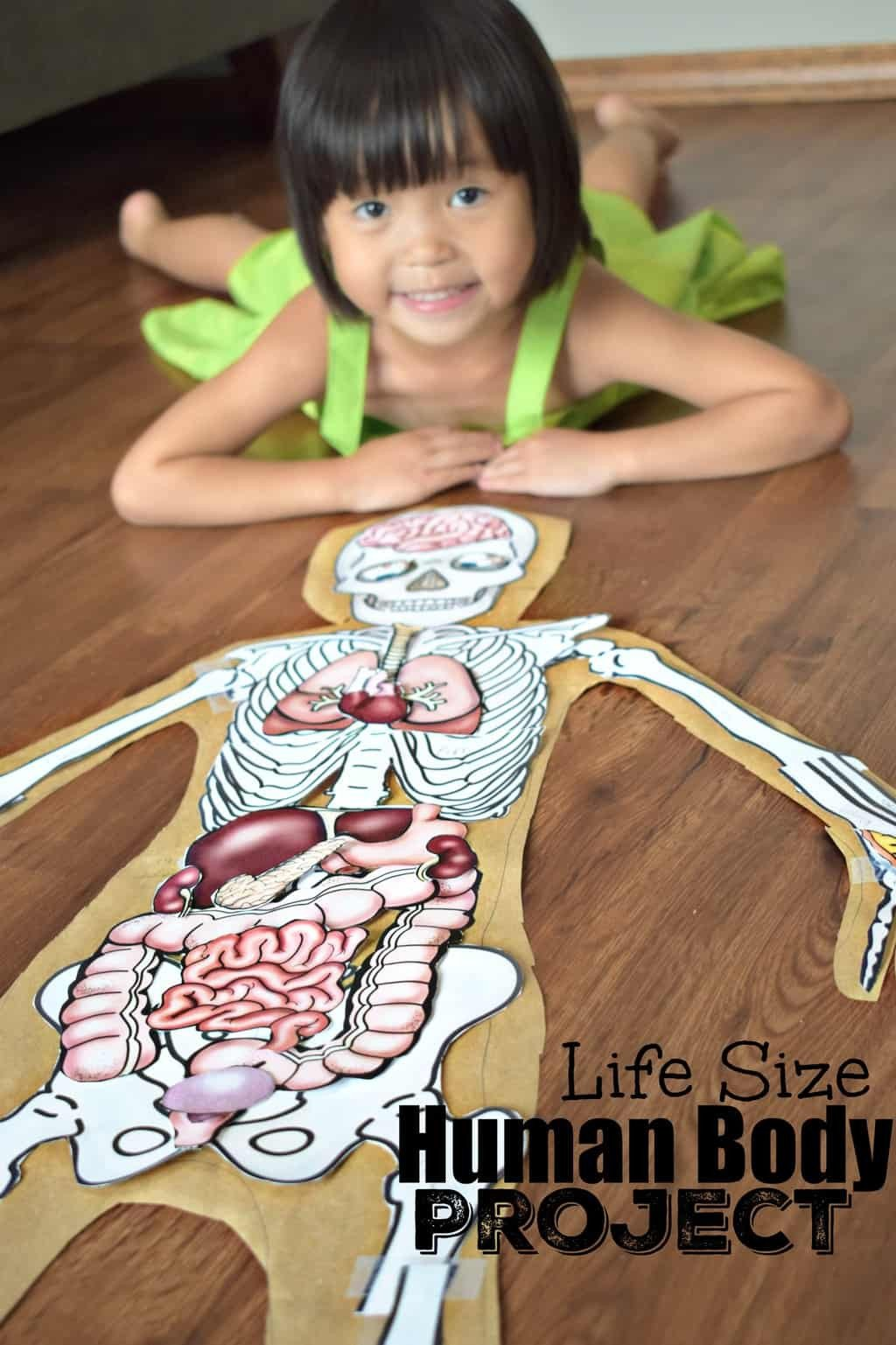 Free Human Body Systems Worksheets Human Body Project with Free Printables