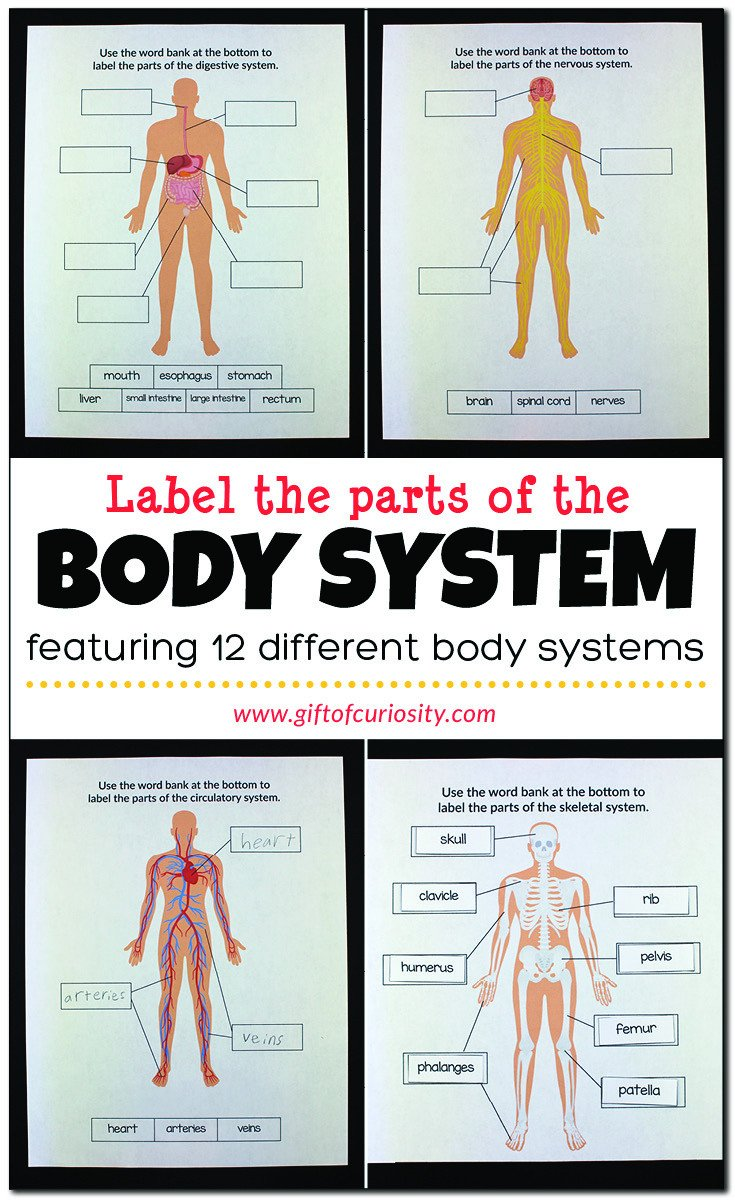 Free Human Body Systems Worksheets Label the Parts Of the Body System Gift Of Curiosity