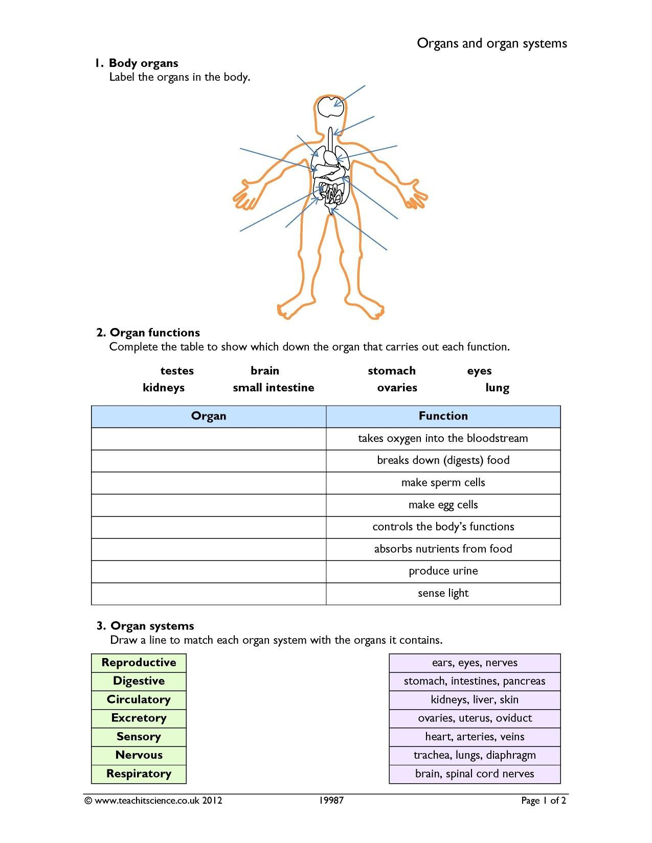 Free Human Body Systems Worksheets organs and organ Systems