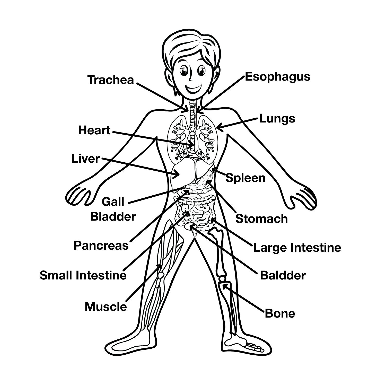 Free Human Body Systems Worksheets Super Teacher Worksheet Human Body Printable Worksheets and