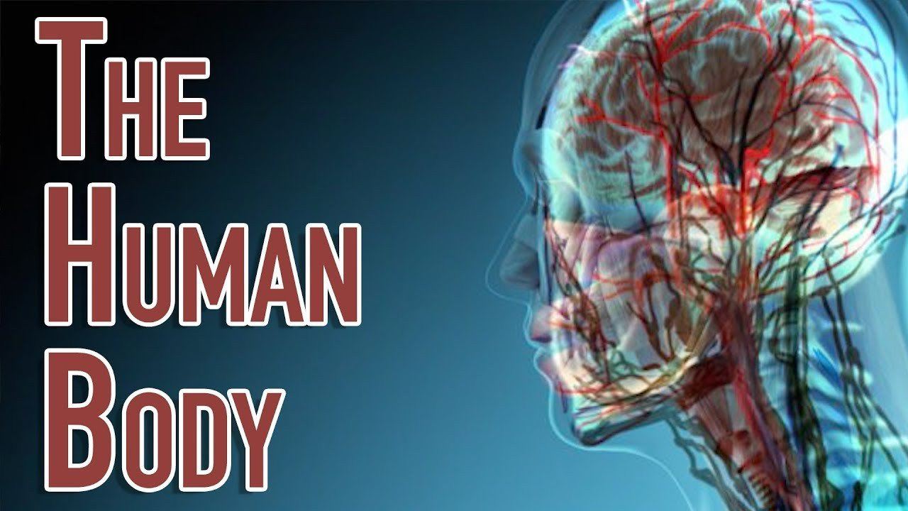 Free Human Body Systems Worksheets the Human Body Facts Worksheets & Key Systems for Kids