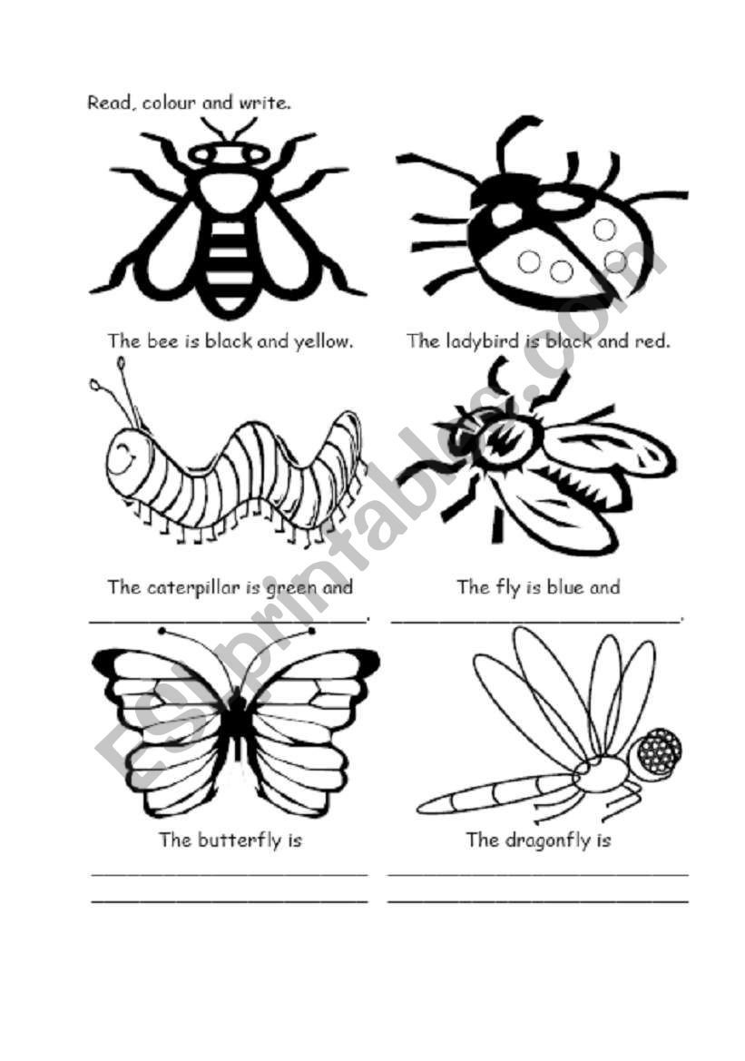 Free Insect Worksheets Color the Insects Esl Worksheet by Lauraesl