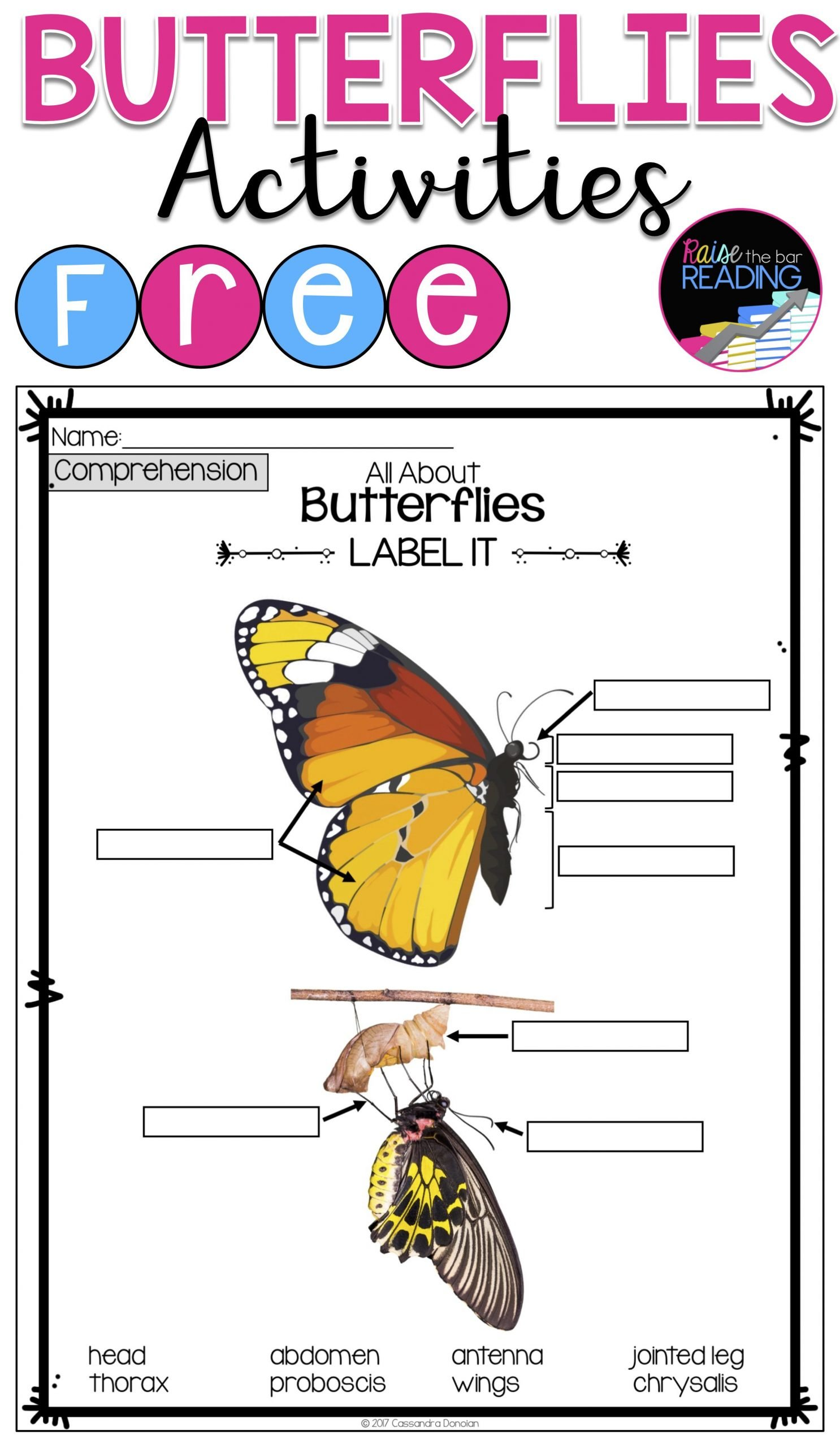 Free Insect Worksheets Free butterflies Activities Insects Unit or Informational