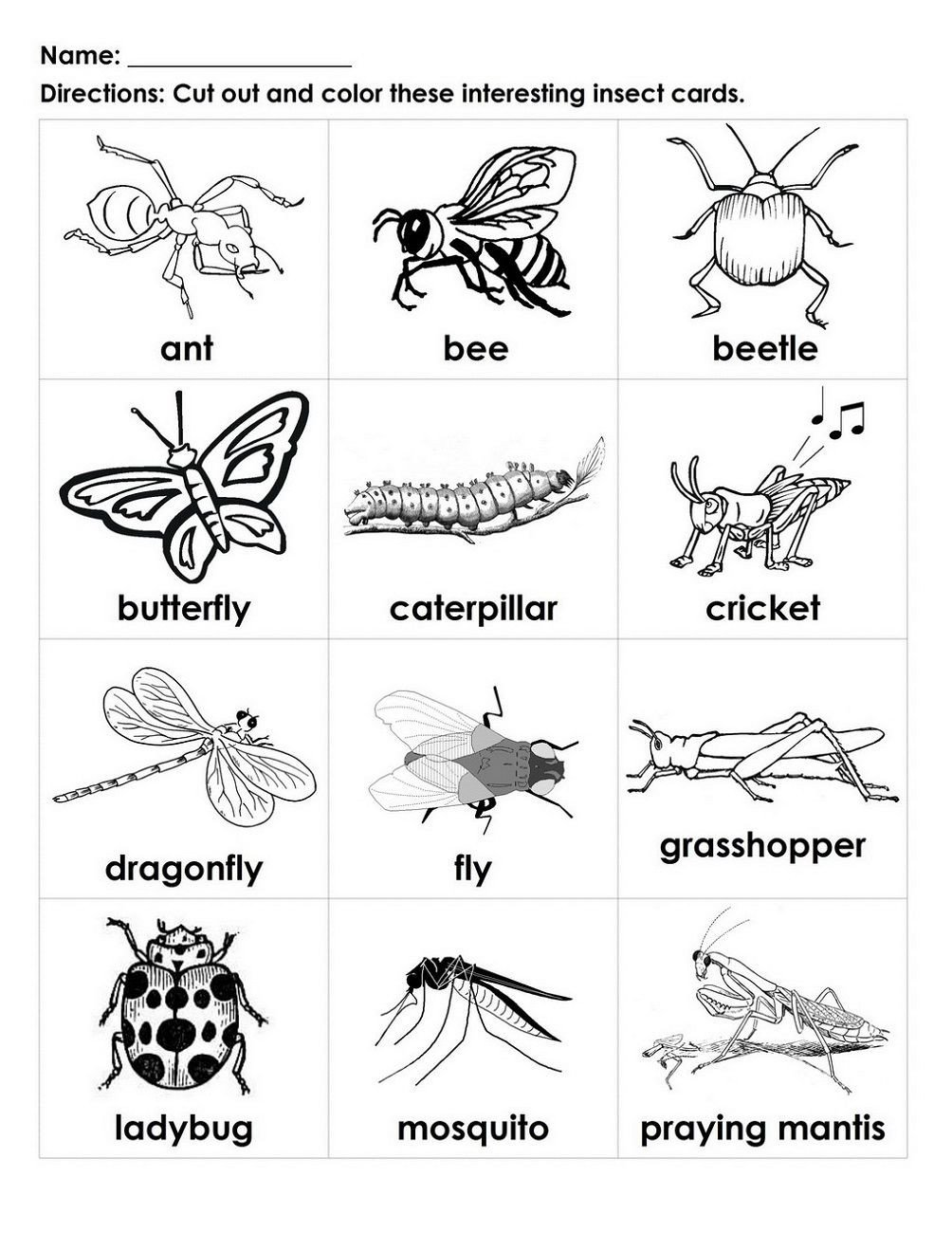 Free Insect Worksheets Free Handouts for Learning