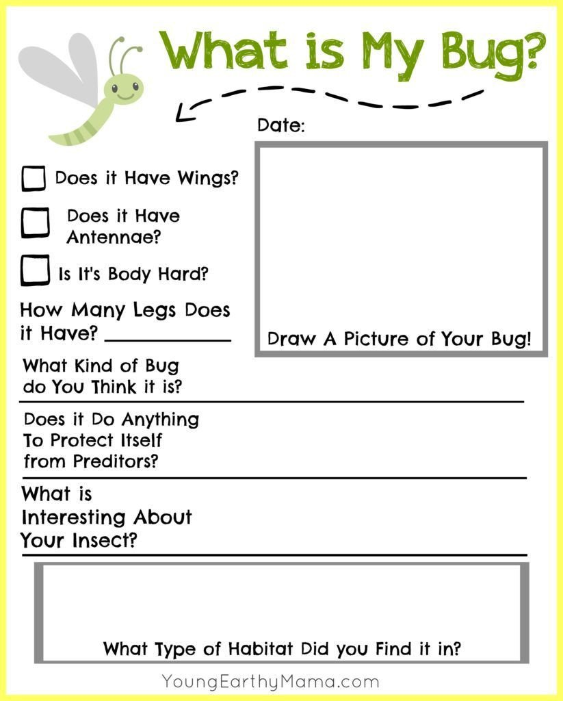 Free Insect Worksheets Free Insect Identification Printable for Kids Nature
