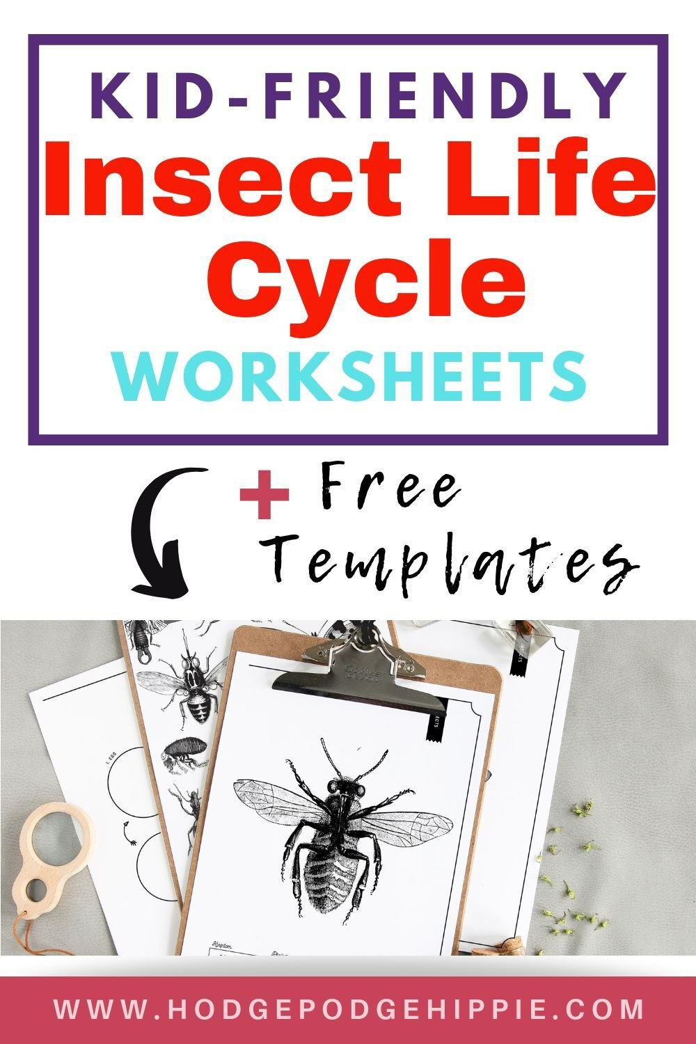 INSECT LIFE CYCLE WORKSHEET