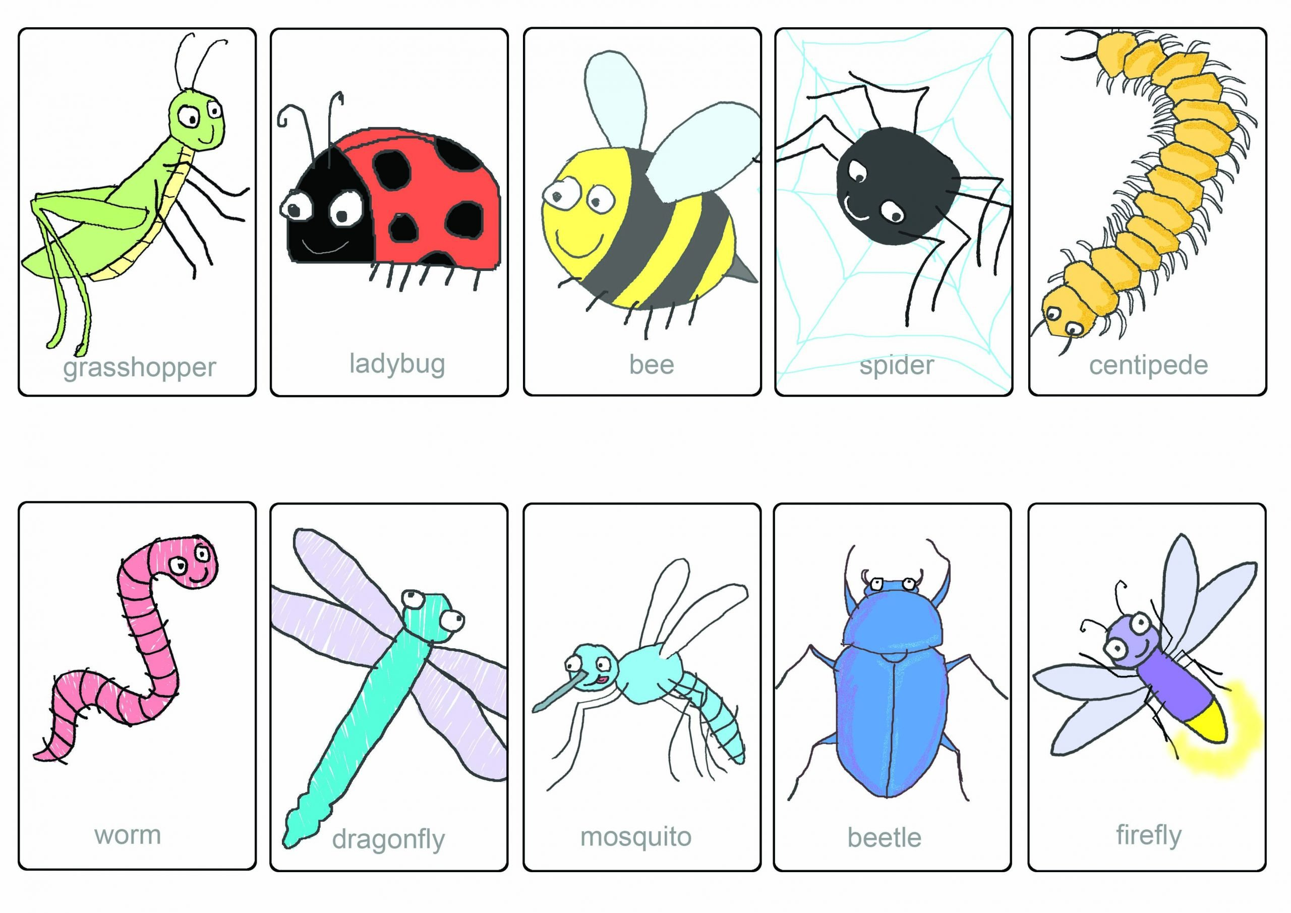 insect flashcards for educations 1