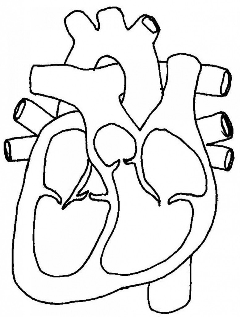 Heart Diagram Worksheet Blank Blank Diagram the Heart Human Body Anatomy