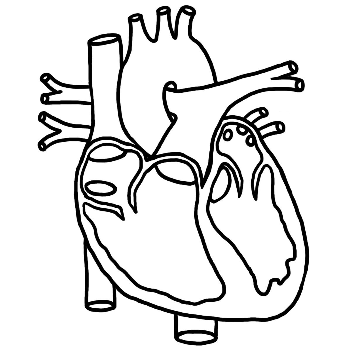 Heart Diagram Worksheet Blank Heart Diagram Blank Human Anatomy