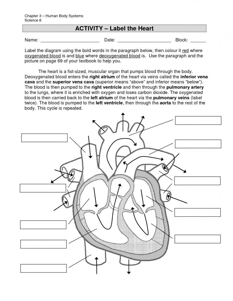 Heart Diagram Worksheet Blank Simple Labeled Heart for Kids Blue and Red Diagram the