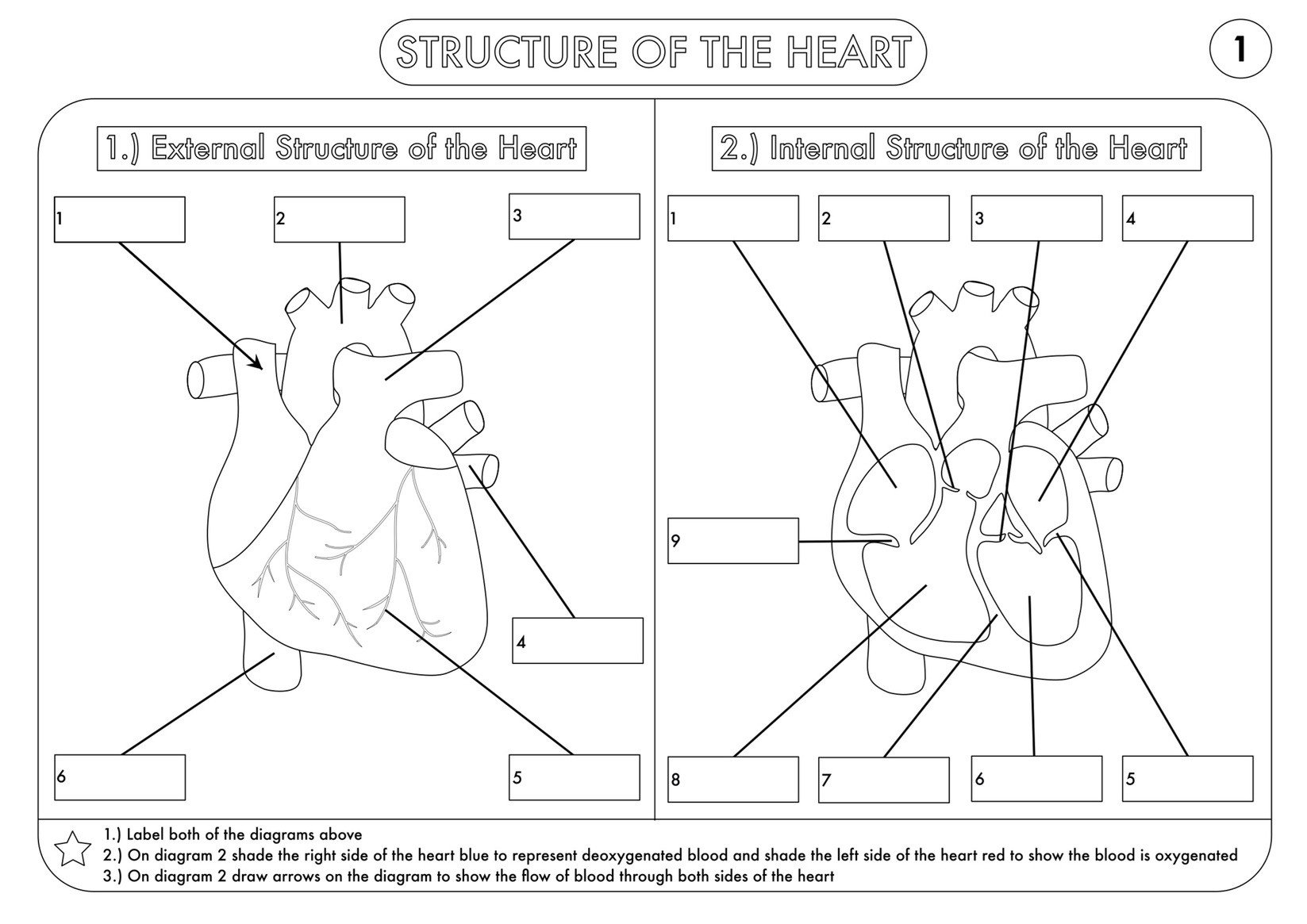 a level biology worksheet pack on heart structure and the cardiac