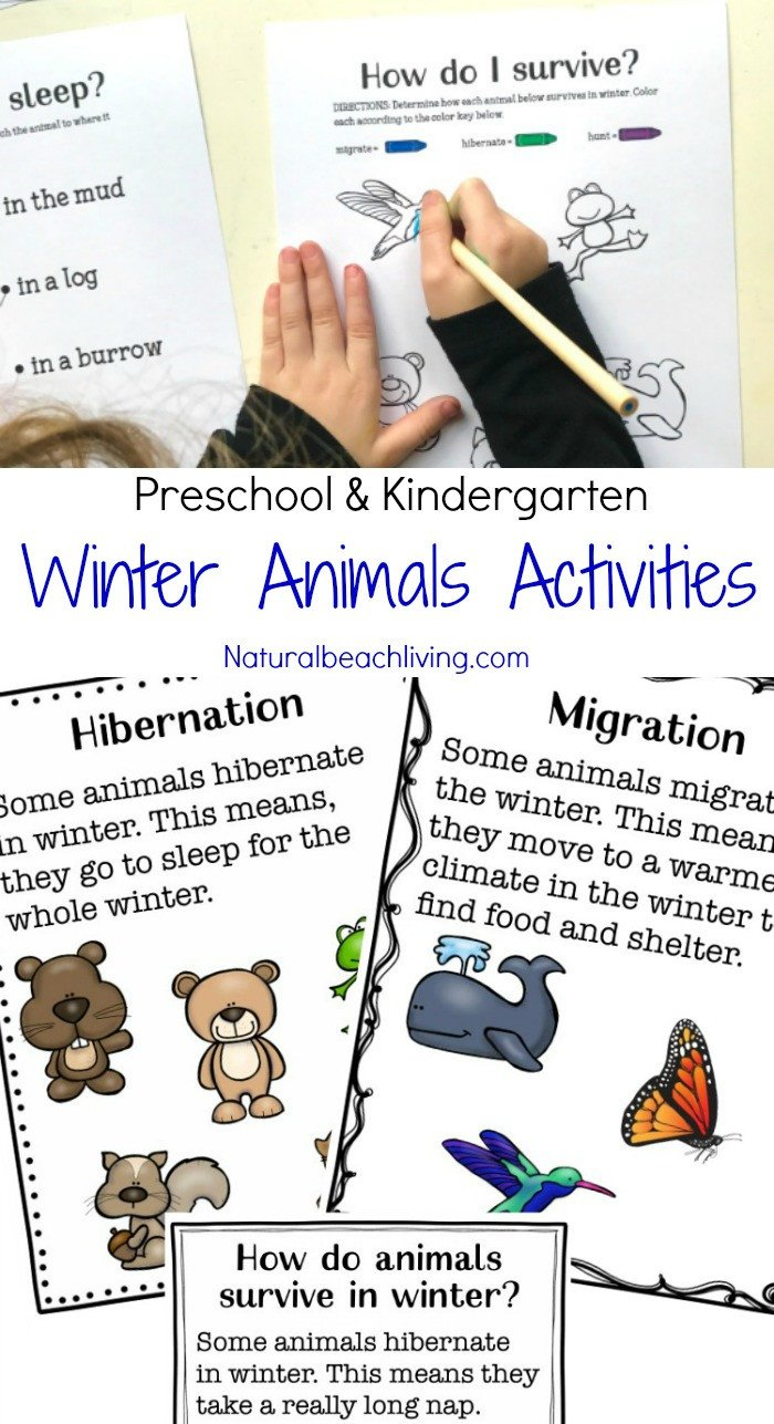 Hibernation Worksheet for Preschool Winter Animals for Preschool Activities Natural Beach Living