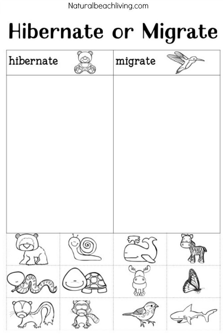 Hibernation Worksheet for Preschool You Ll Love these Winter Animals for Preschool Ideas