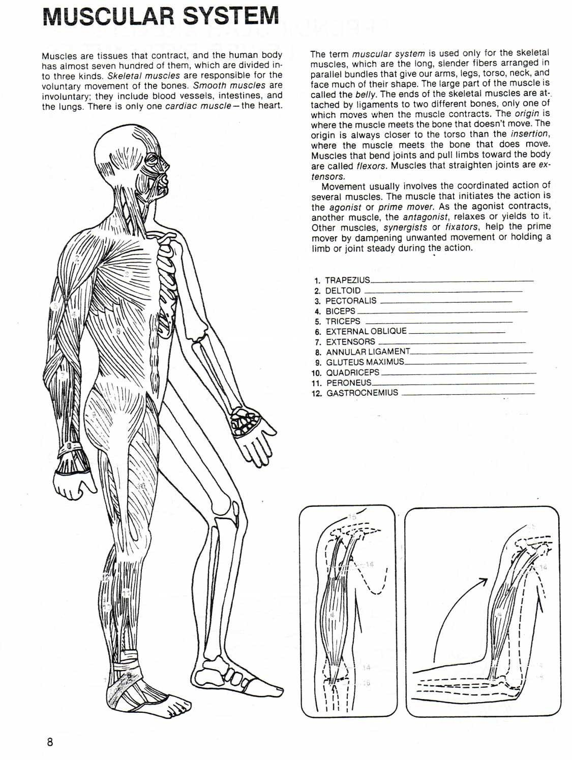 Human Body Worksheets Middle School Pearson Worksheet for High School Health