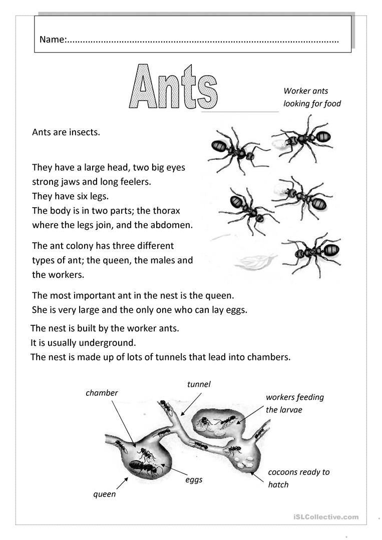 Insect Worksheets for Preschoolers Ants English Esl Worksheets for Distance Learning and