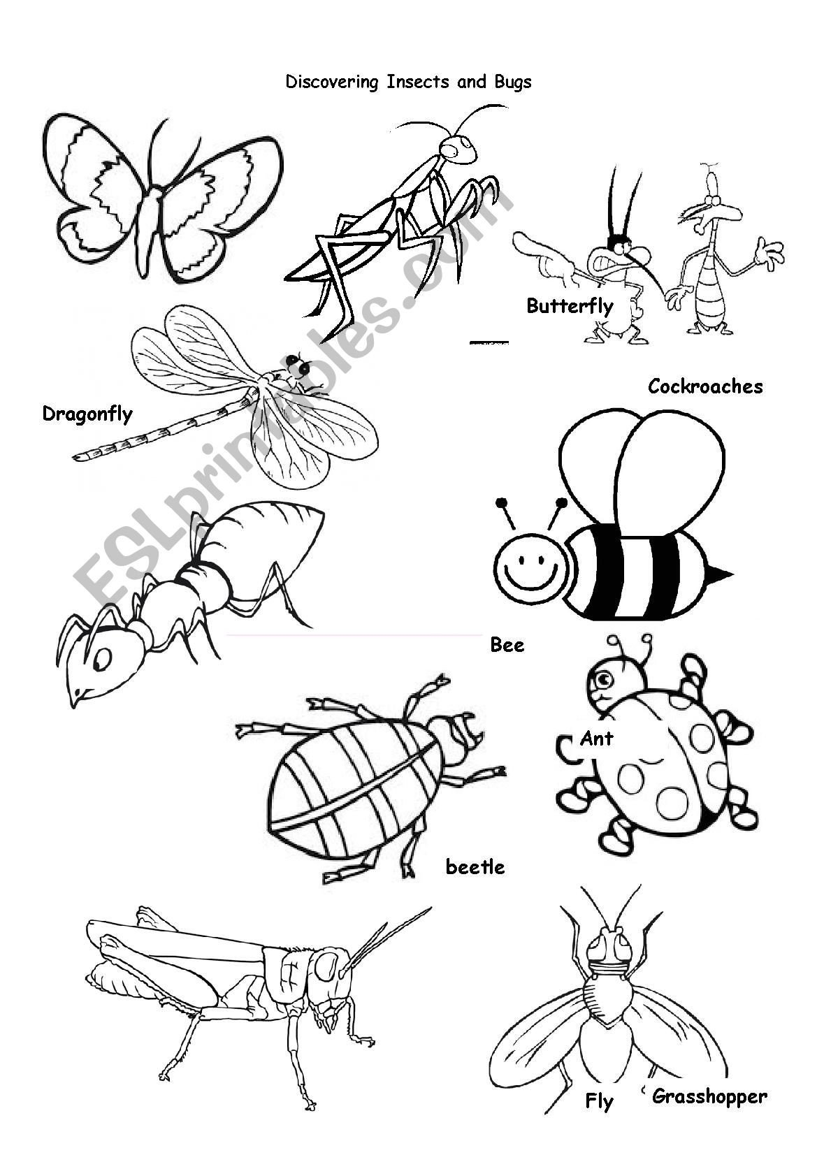 Insect Worksheets for Preschoolers Insects Animals Worksheet Printable Worksheets and