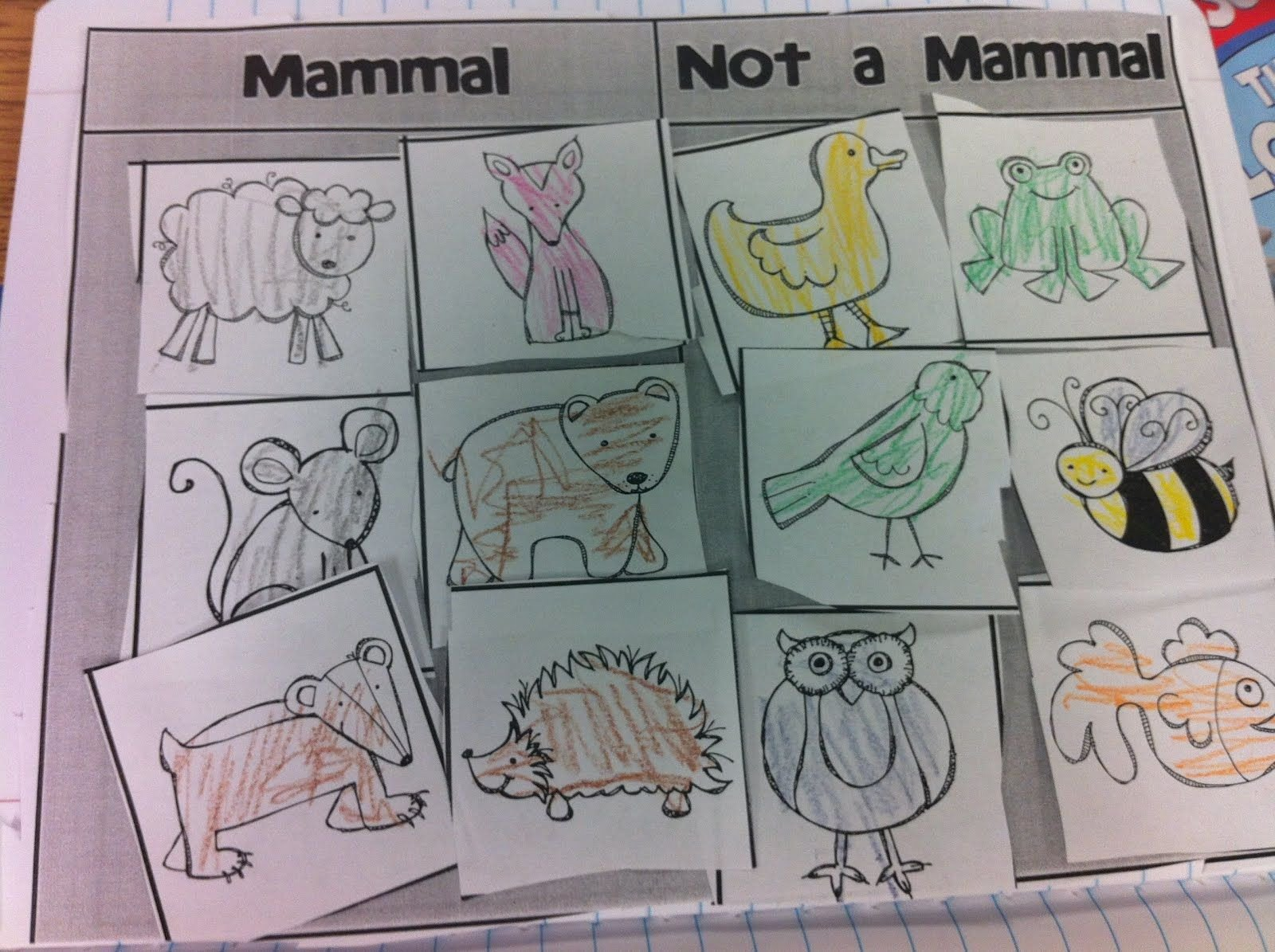 Mammal Worksheets First Grade Mammals and Not Mammals sort