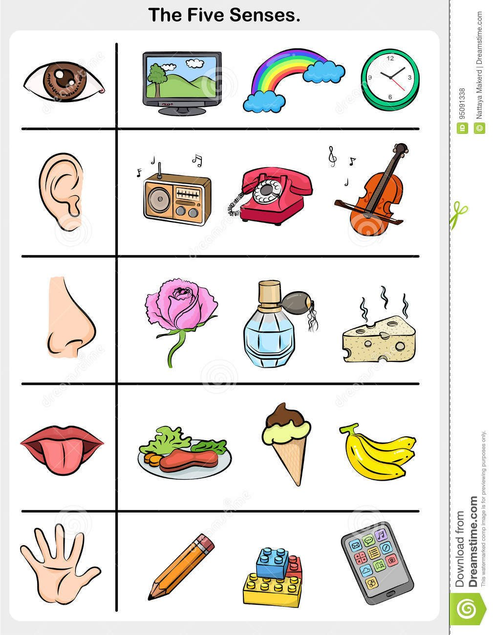 Sense Of Taste Worksheets Hearing Taste Stock Illustrations – 266 Hearing Taste Stock