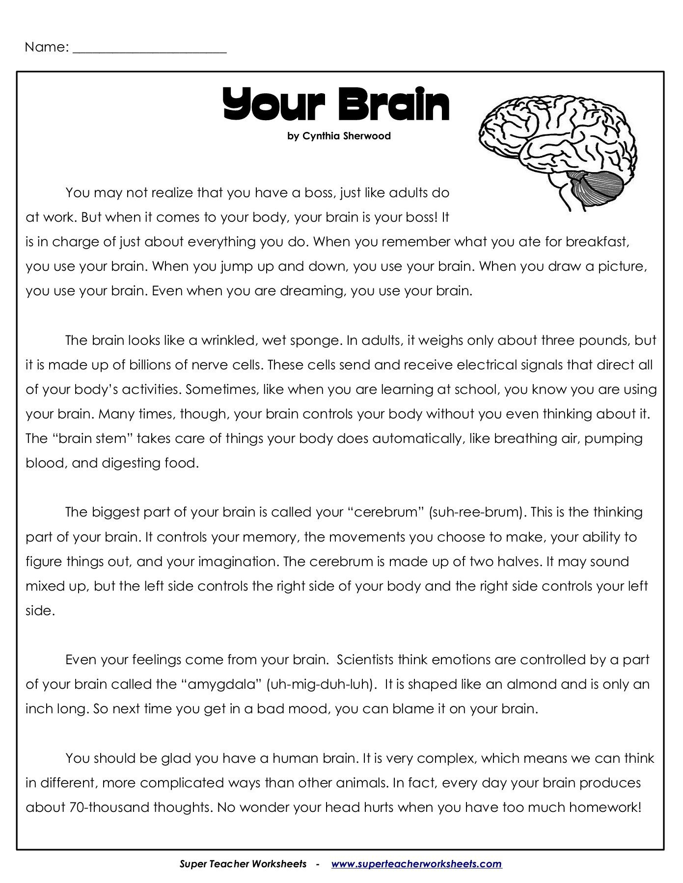 Super Teacher Worksheets Free Account Your Brain Superteacherworksheets