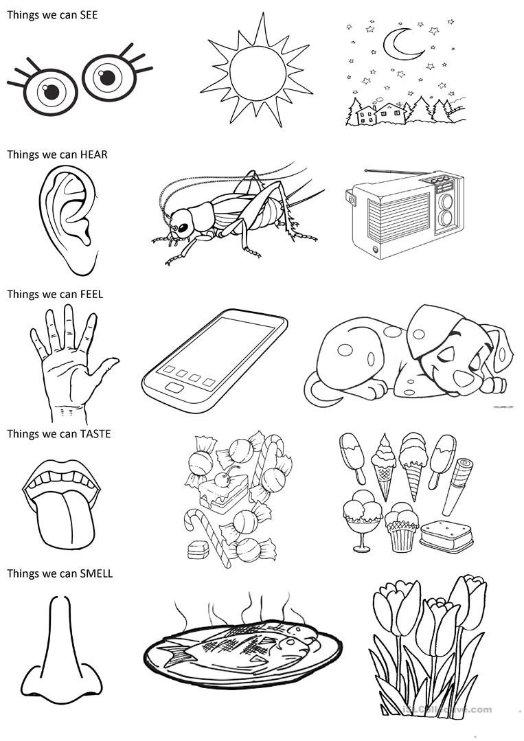 the 5 senses coloring exercise 1