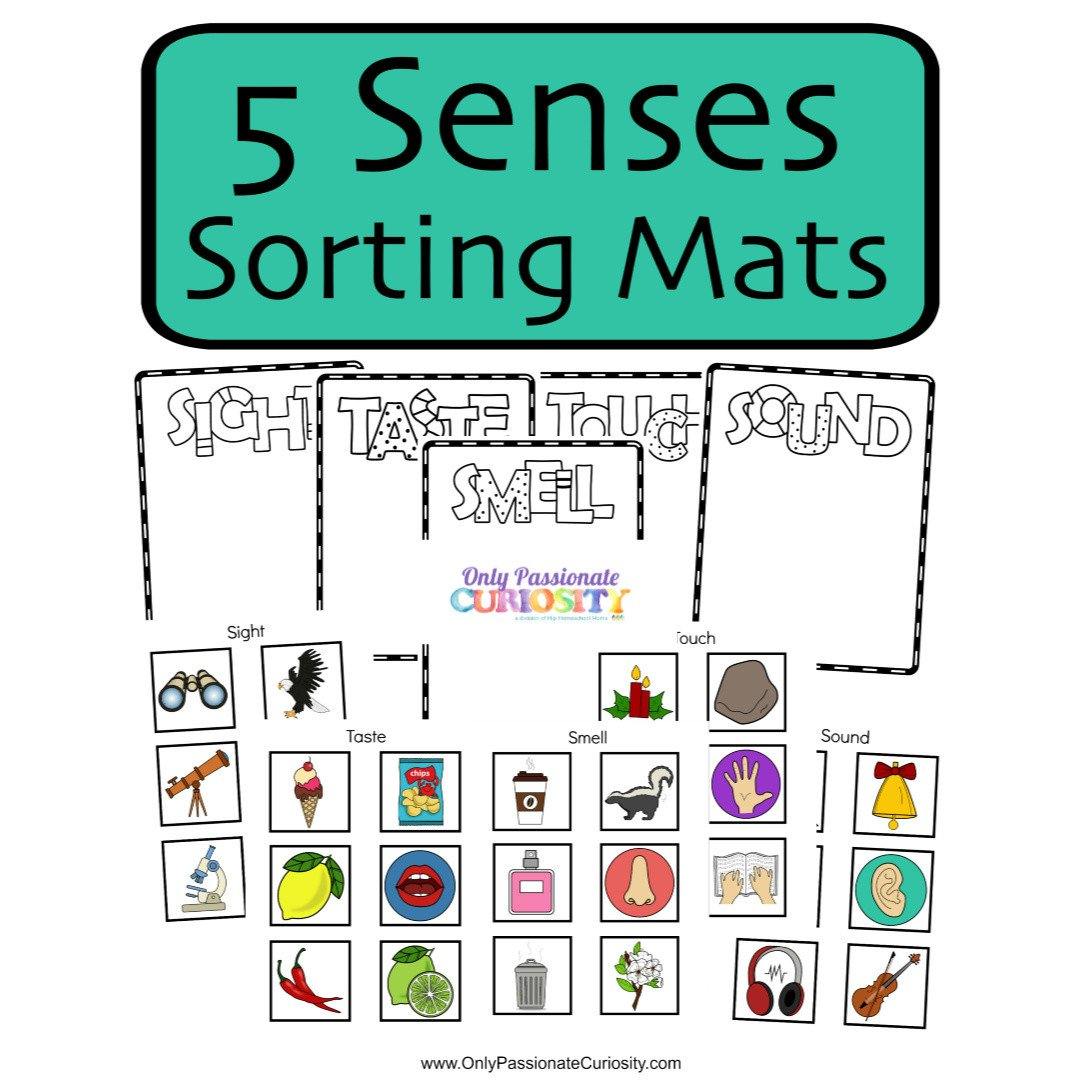 5 Senses Worksheet for Kindergarten 5 Senses sorting Mats Ly Passionate Curiosity
