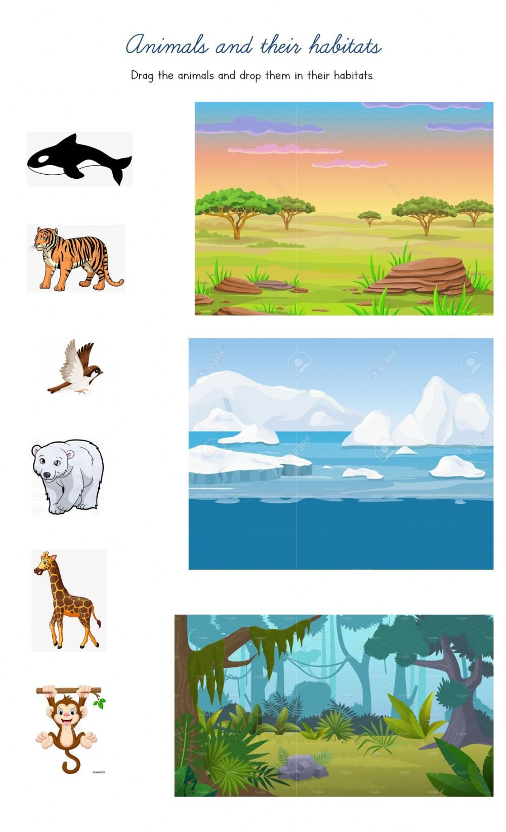 Animals and their habitats drag and drop kc yd
