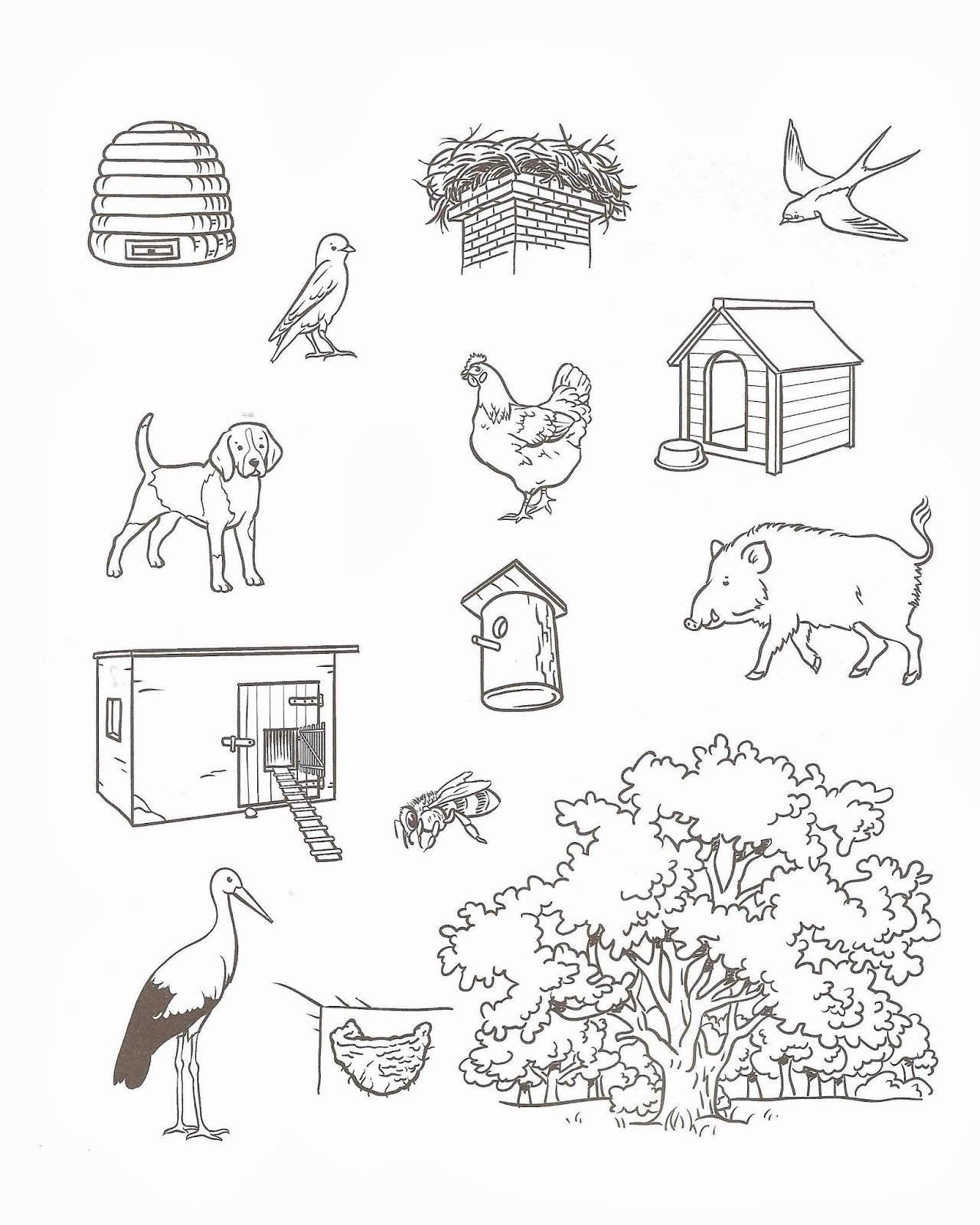 Animal Habitats Worksheets for Kindergarten Animal Habitat Worksheets for Kindergarten Kindergarten
