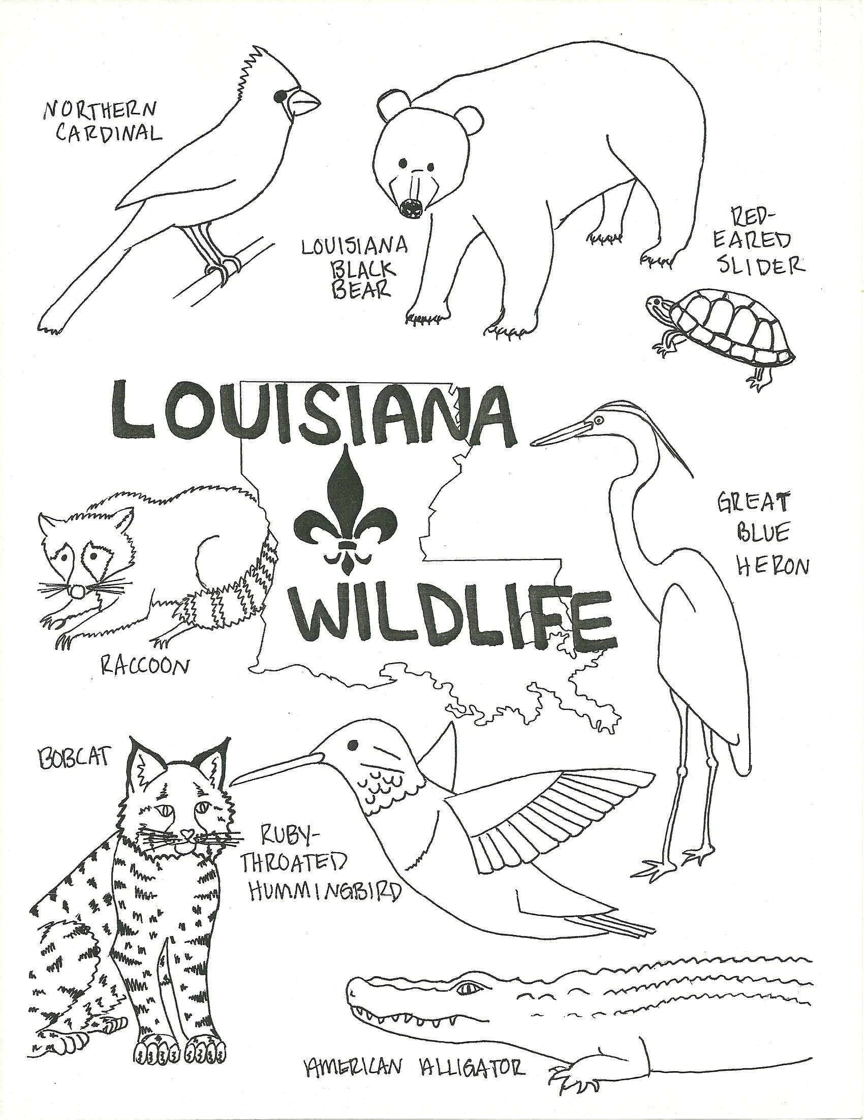 Animal Habitats Worksheets for Kindergarten Wildlife Coloring Animal Habitat Worksheets Kindergarten