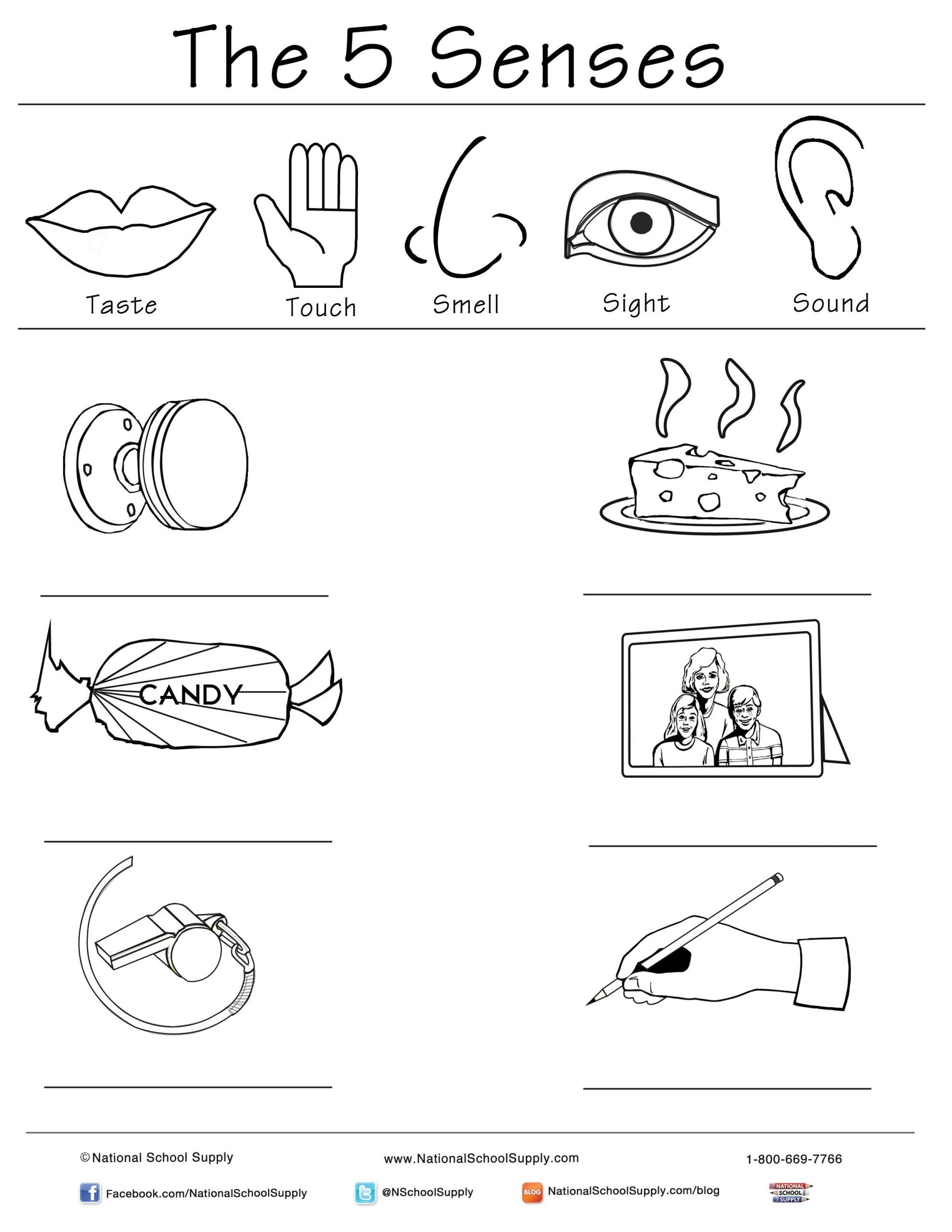 Five Senses Kindergarten Worksheet New 5 Senses Printable is Great for Classrooms Of All Ages