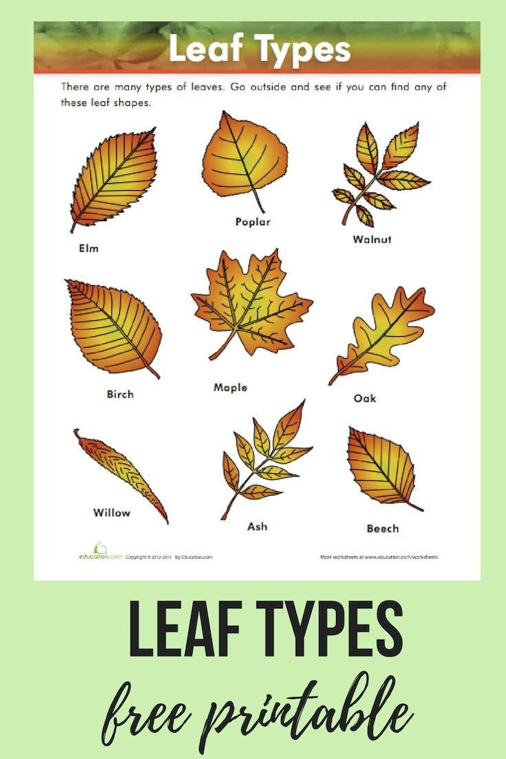 Free Horticulture Worksheets Leaf Types Worksheet Education