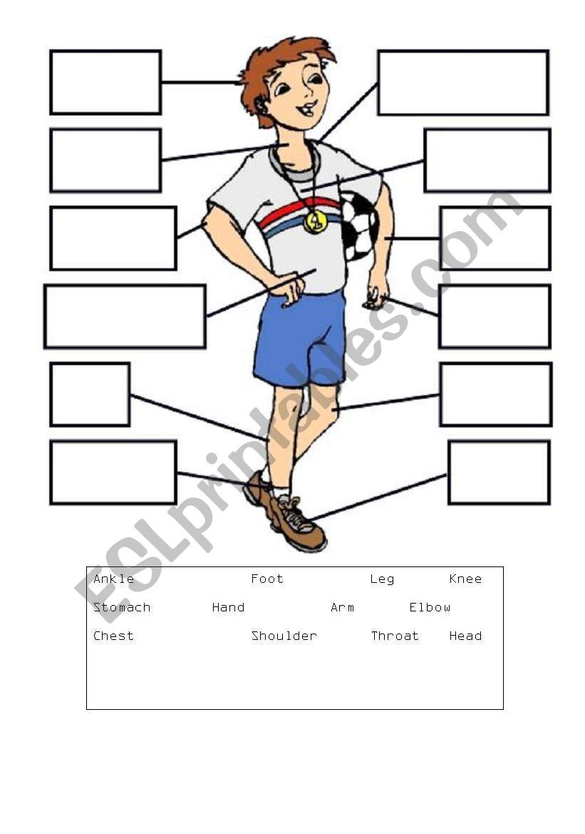 Body parts labelling worksheet