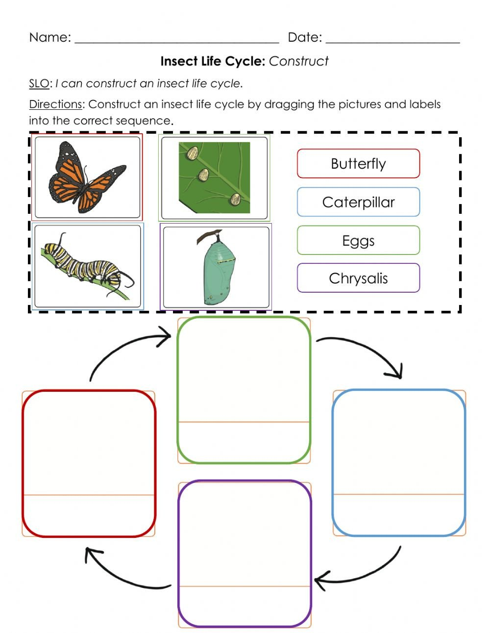 Insect Reading Comprehension Worksheets Insect Life Cycle Construct A Interactive Worksheet