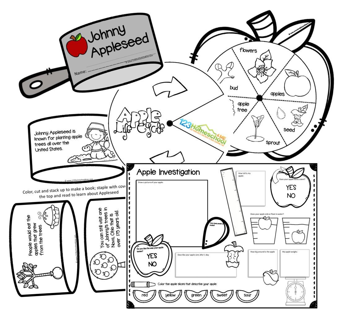 apple life cycle apple experiment and johnny appleseed