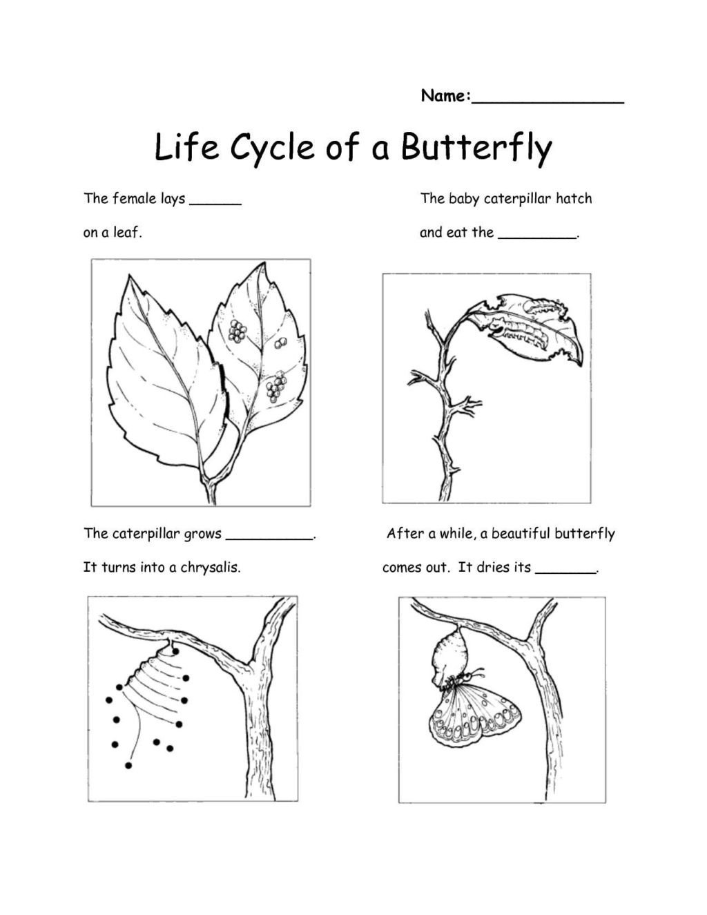 Kindergarten Science Worksheets Free Worksheet Worksheet astonishing Science Worksheets for