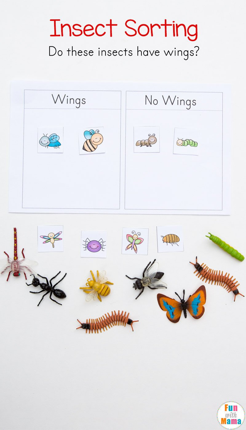 Kindergarten sorting Worksheets Preschool Insect theme sorting Worksheet Bug Activities