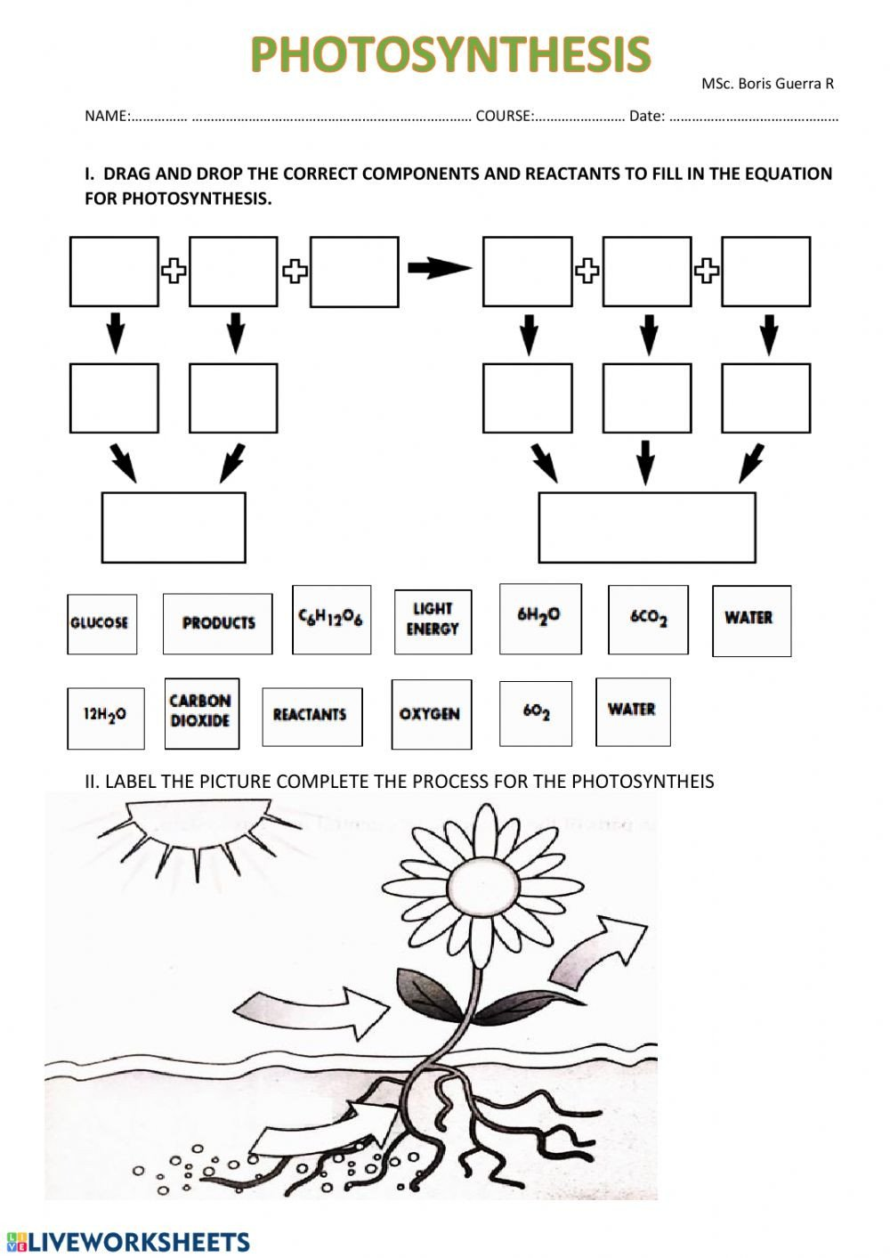 Light Energy Worksheets Synthesis Interactive Worksheet