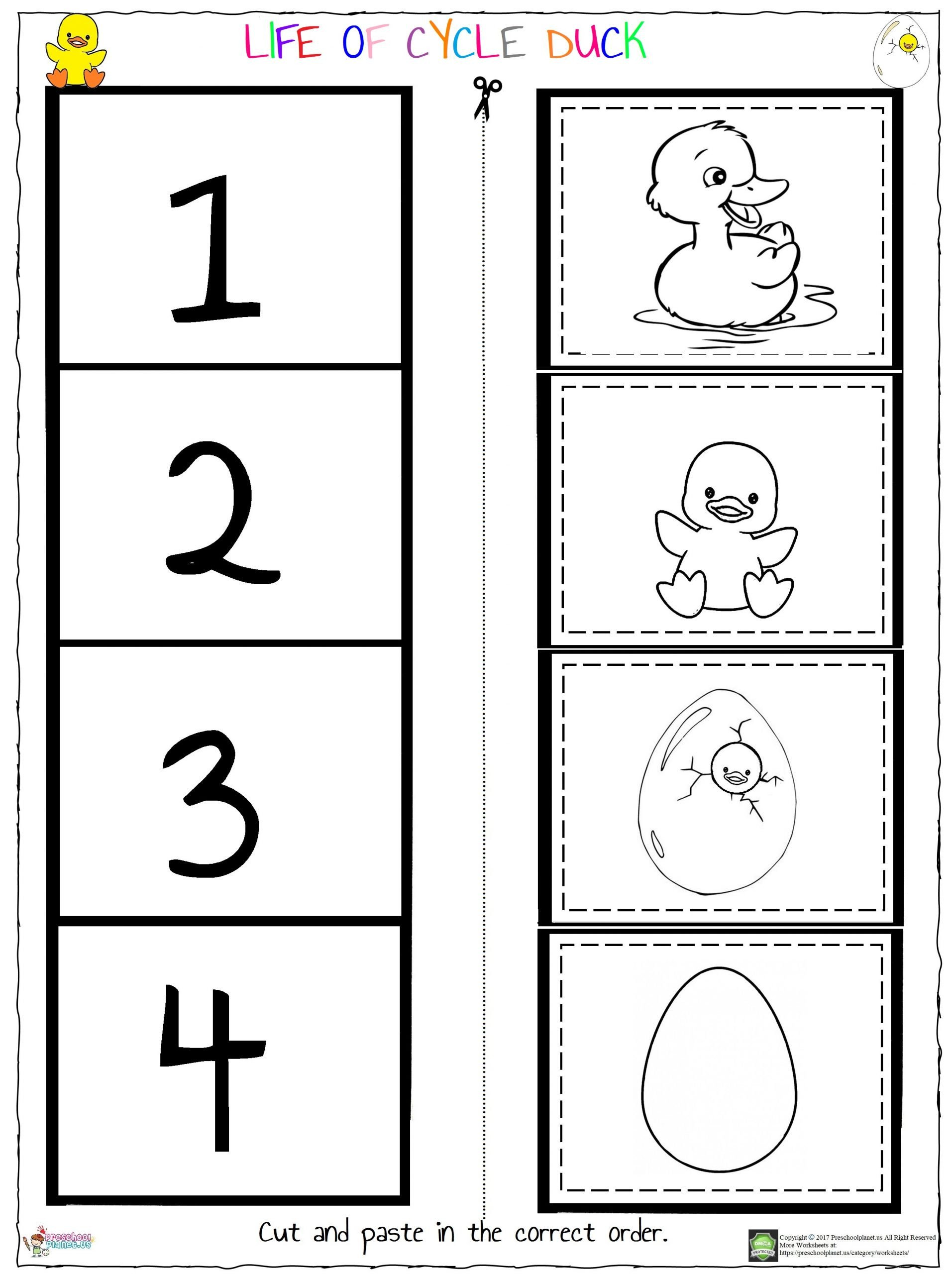 Life of Cycle Duck Worksheet scaled