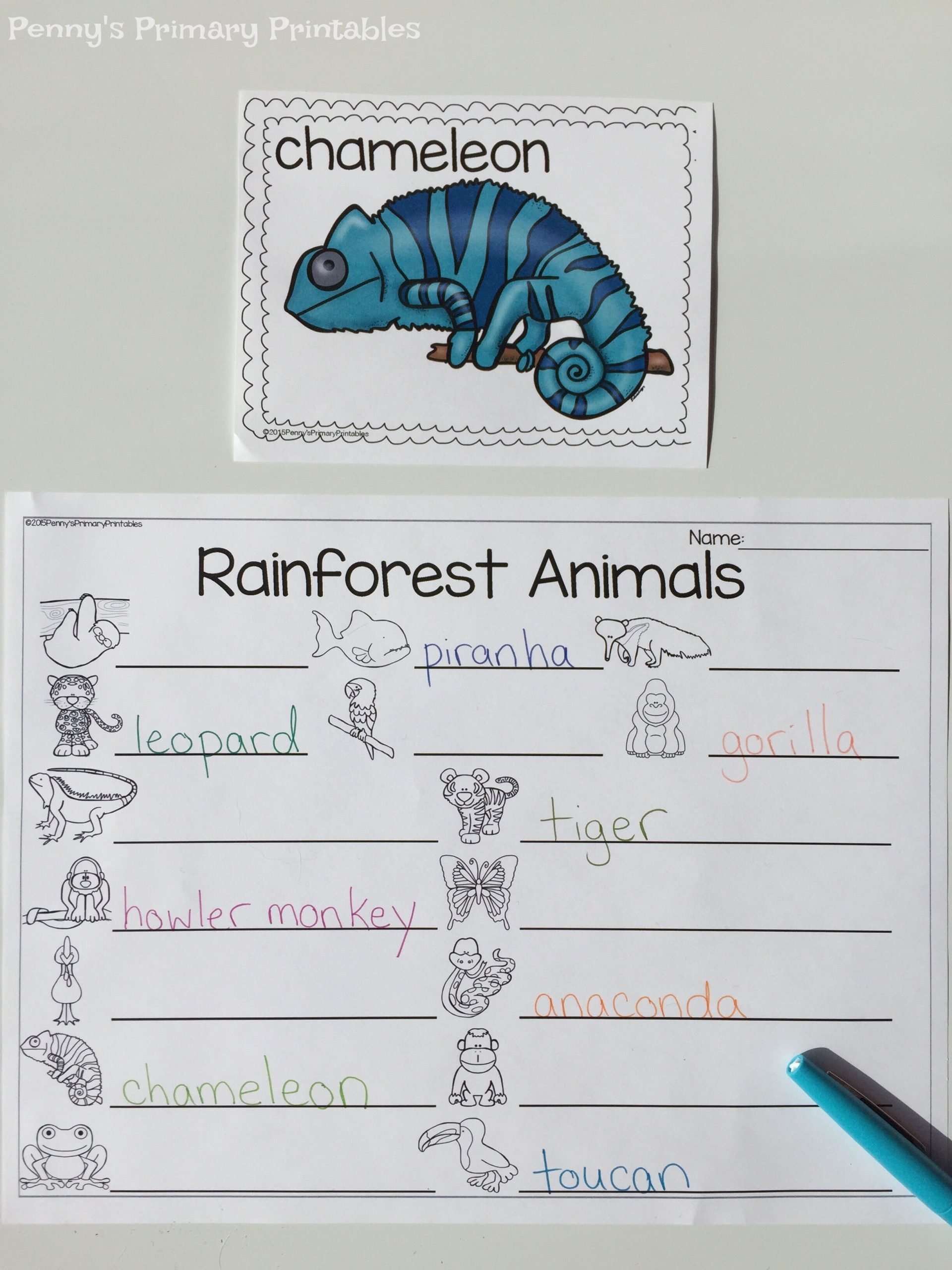 Rainforest Worksheets for Kindergarten All About Rainforest Animals Practice Reading and Writing
